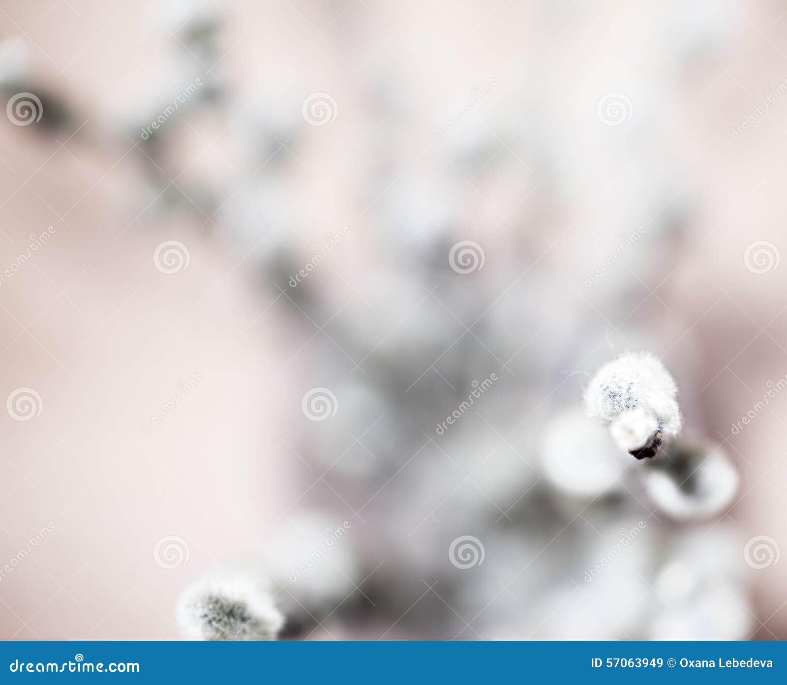 De mooie lente bloeit achtergrond Aard bokeh