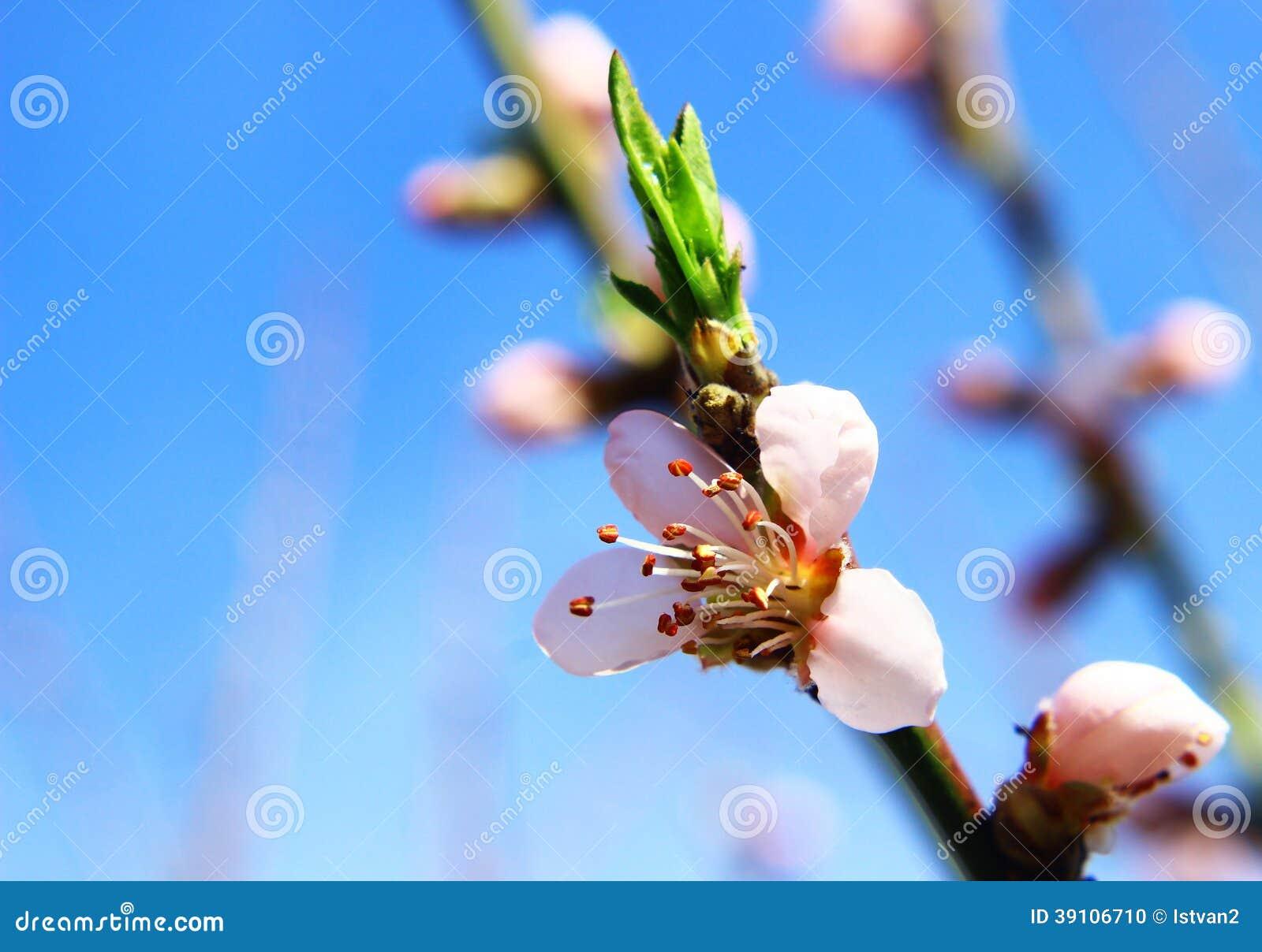 De mooie lente bokeh