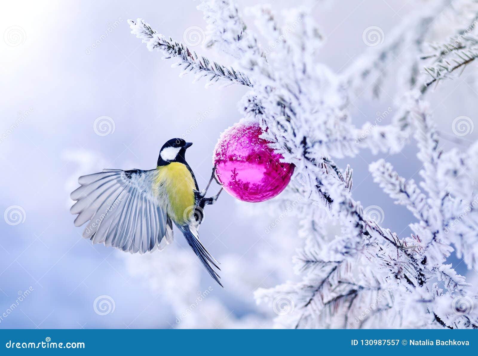 De mooie mees van de Kerstkaartvogel op een tak van een feestelijke spruc