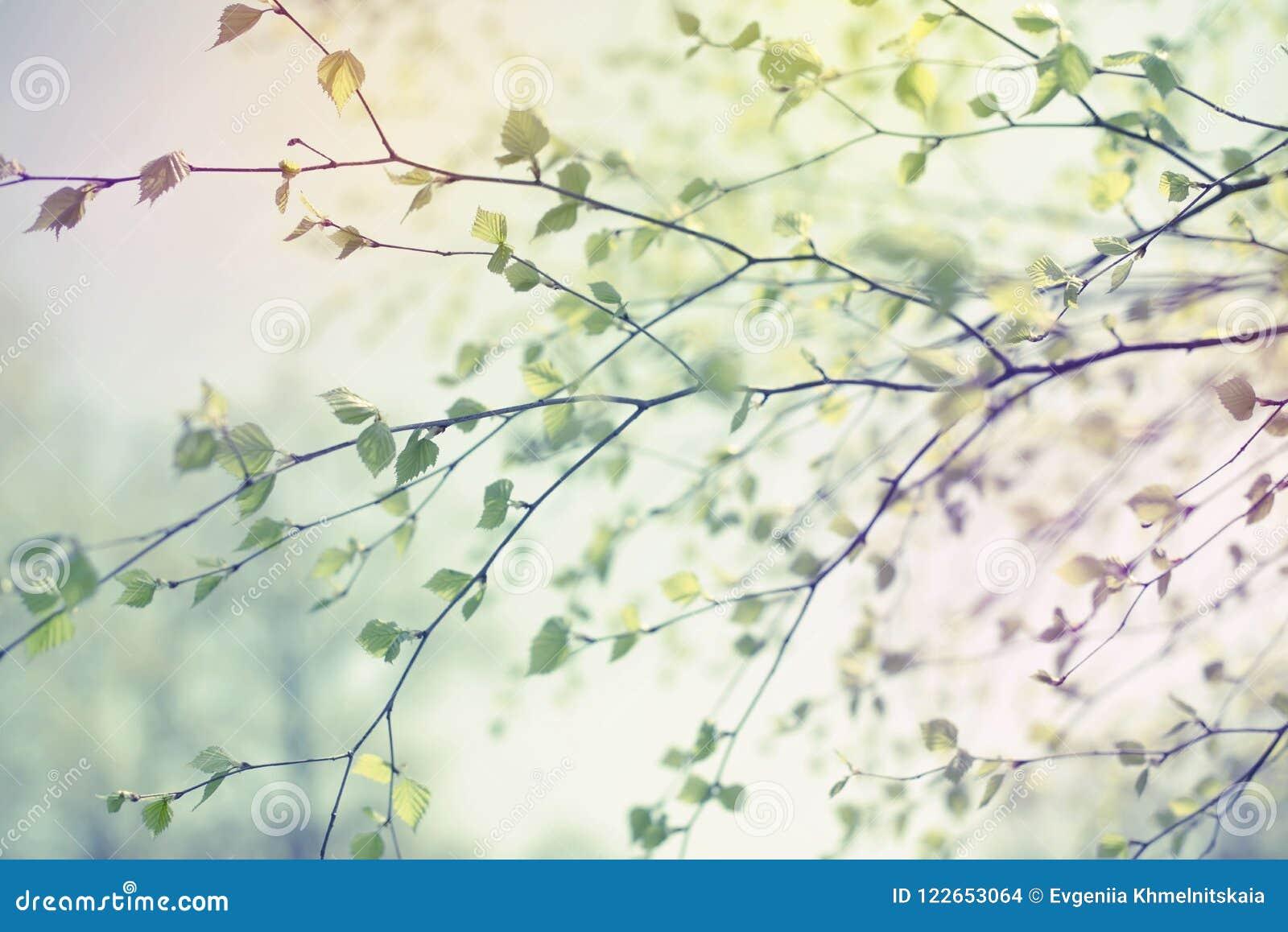 De mooie tak van de berkboom met groene bladeren in de hemel