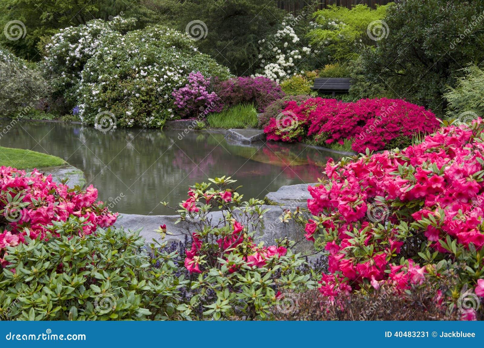 Bloem En Tuin : De mooie vijver van de bloementuin stock afbeelding afbeelding