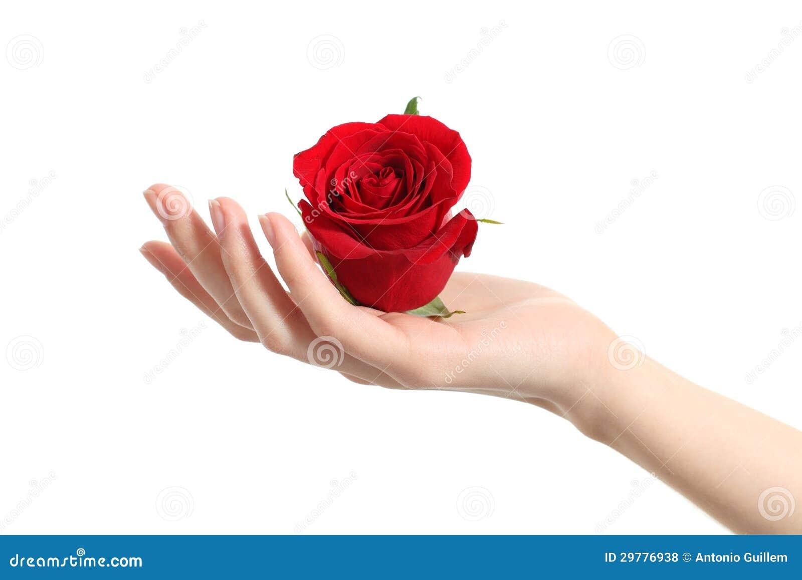 De mooie vrouwenhand die een rood houden nam toe