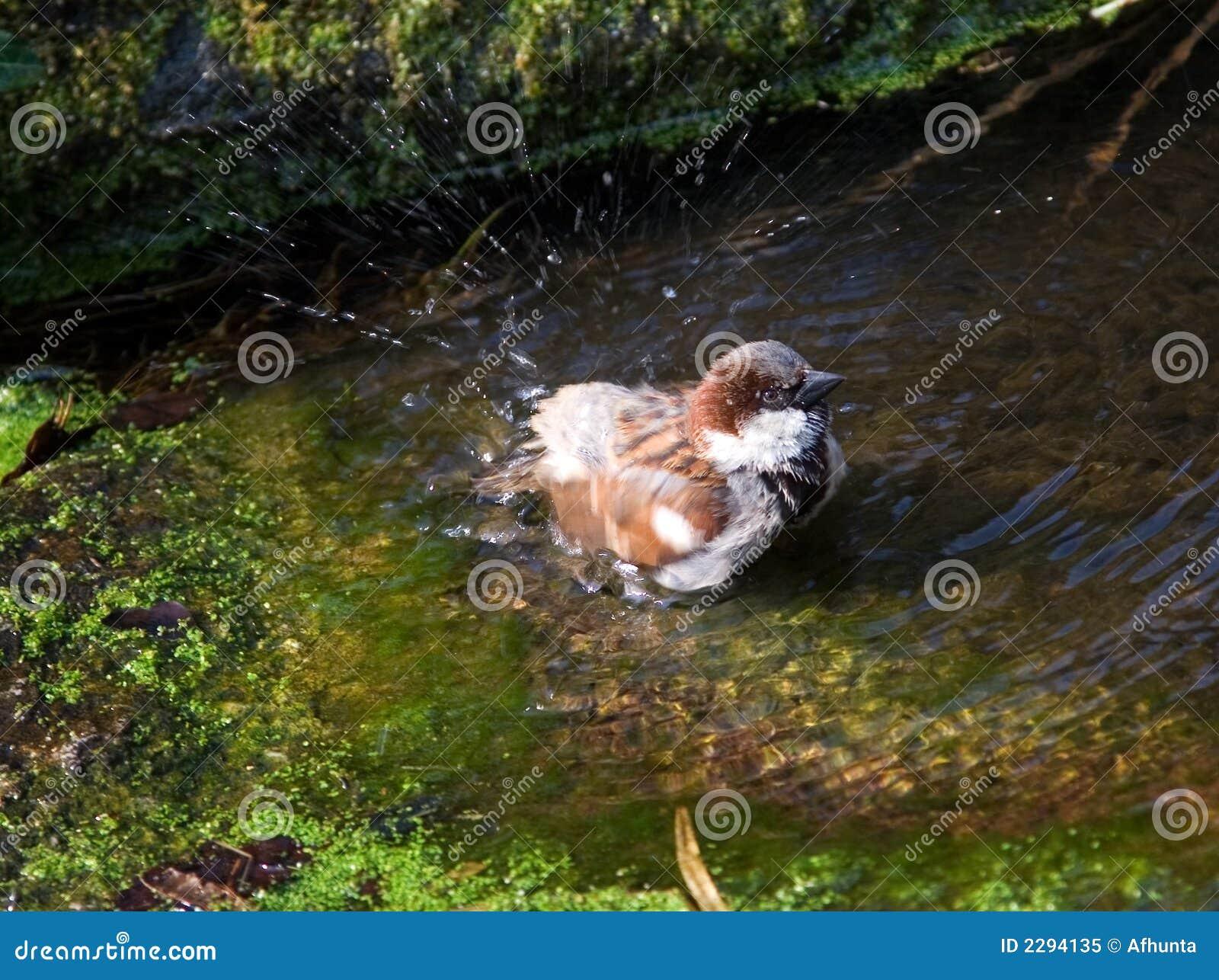 De mus neemt een bad