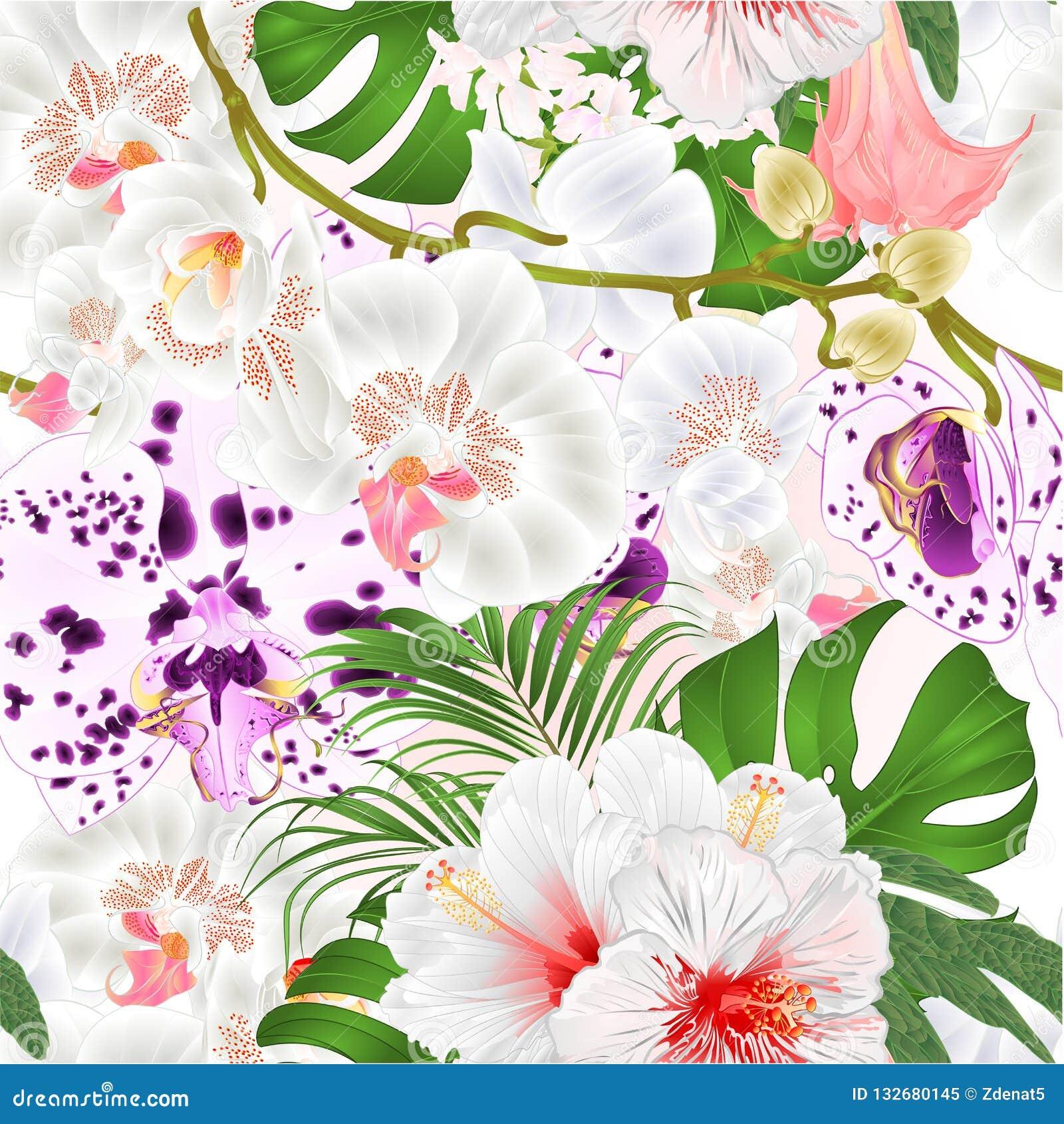 De naadloze orchideeën van de textuurtak bloeit tropische de installatiestam van Phalaenopsis en knoppen en witte hibiscus uitste