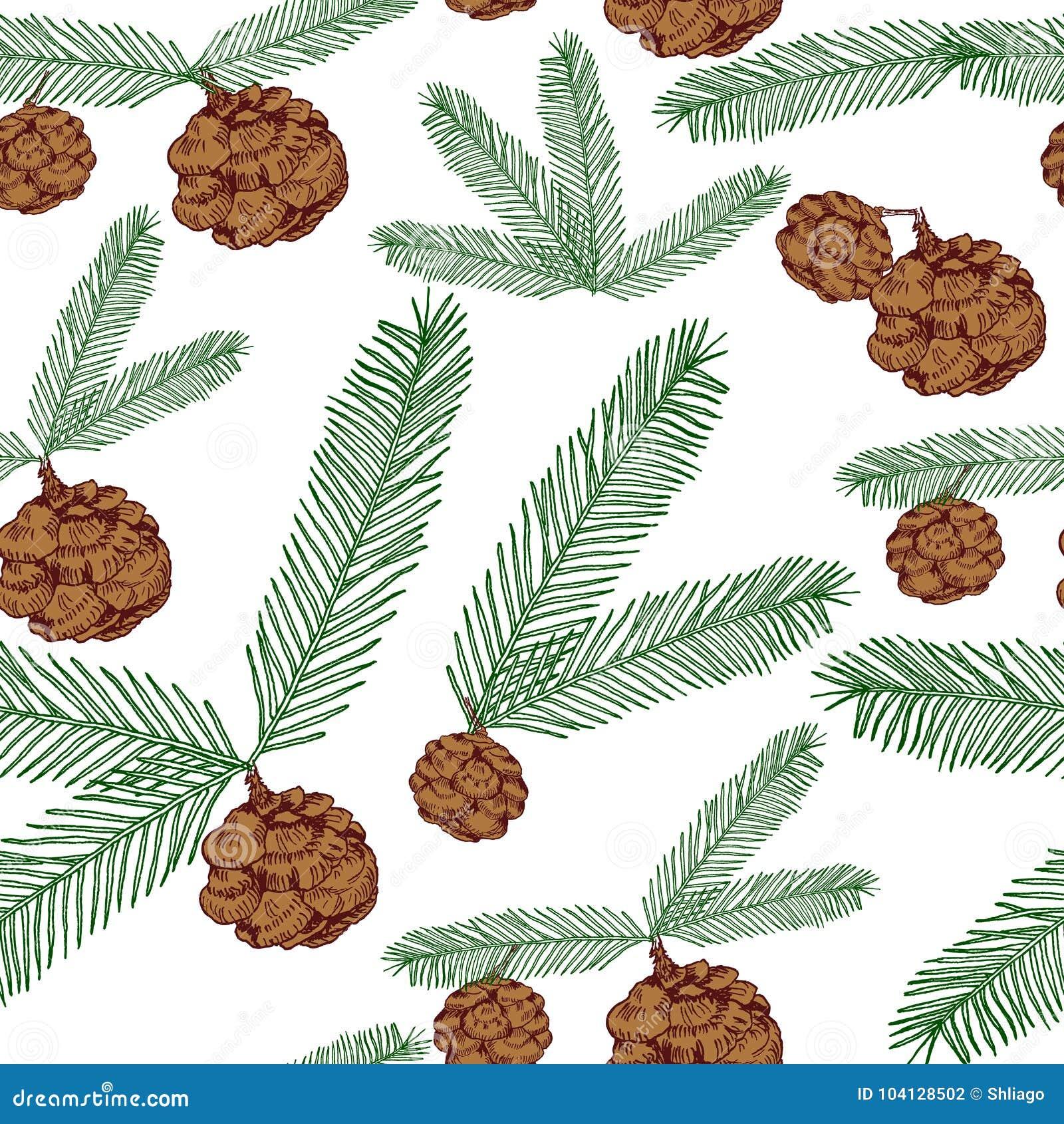De naadloze takjes van de patroonboom en kegels geschilderde lijn en gekleurd op wit Boom, spar, denneappels, takjes Illustratie