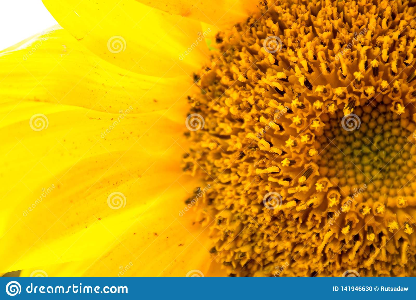 De nabijheid zonnebloembloemblaadjes