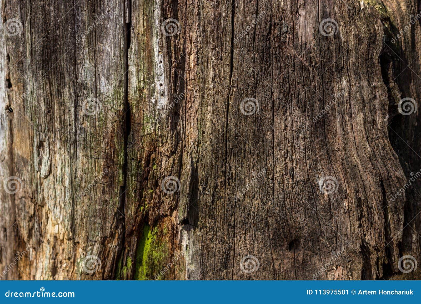 De natuurlijke achtergrond van rot hout op zeer oude boomstompen De textuur van de oude stompen