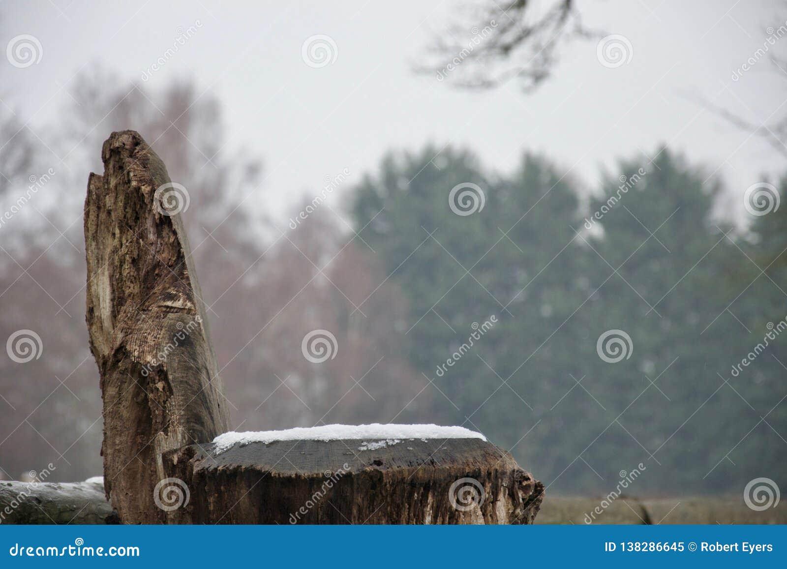 De natuurlijke houten zetel van de boomboomstam in sneeuw met bomen op achtergrond