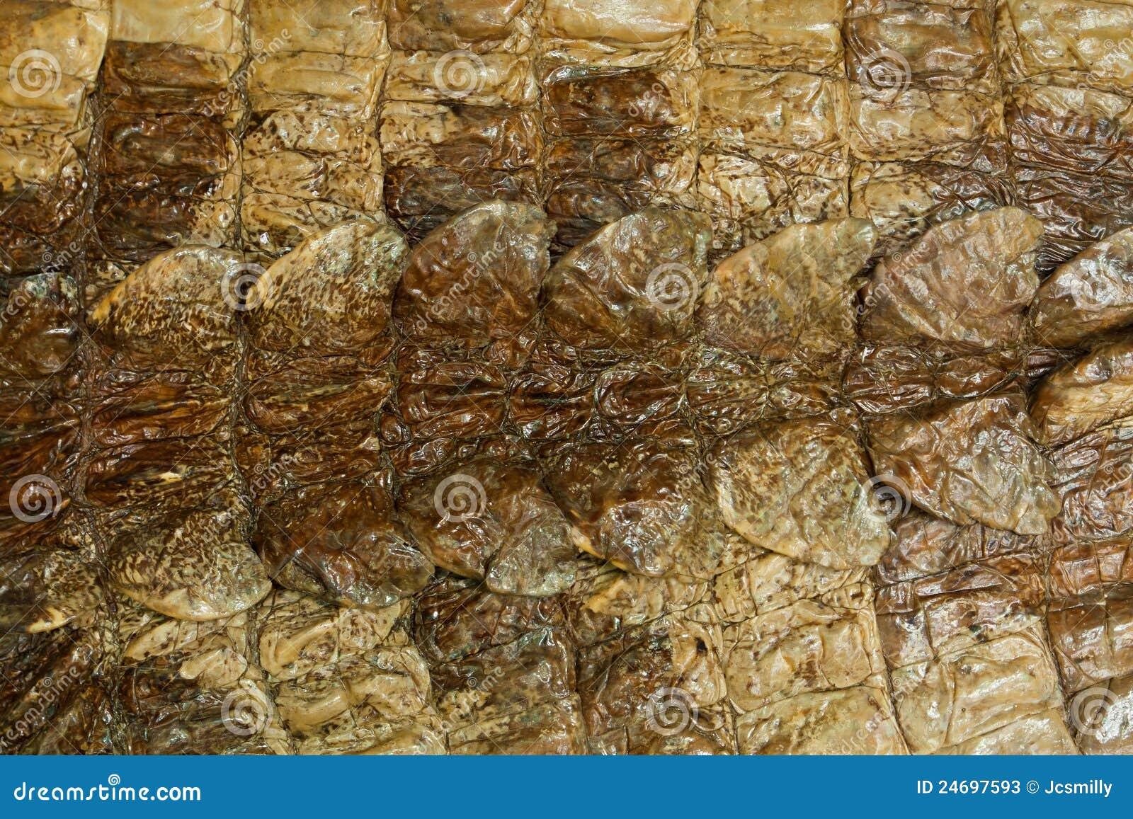 De natuurlijke textuur van de krokodilhuid