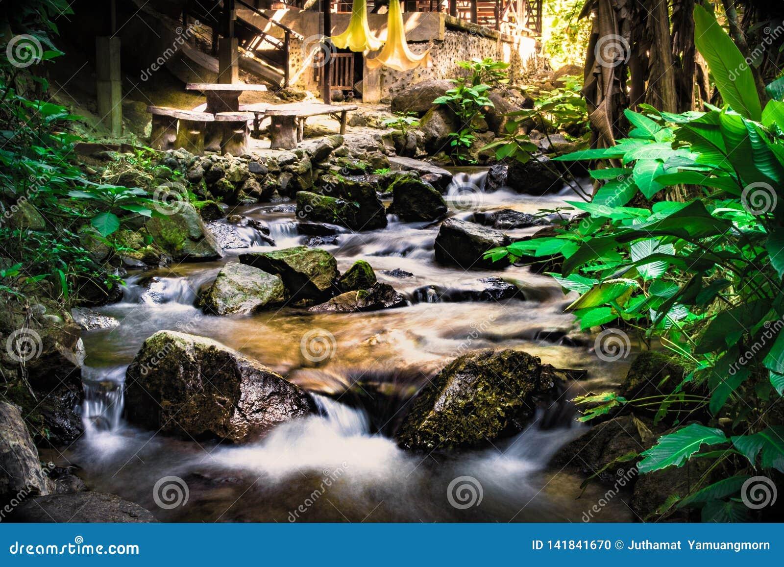 De natuurlijke de winterwatervallen, riviermeningen, weelderige bosparken, achtergrond is nat met rotsen