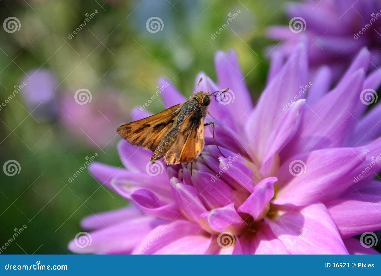 De Nectar van Ooh