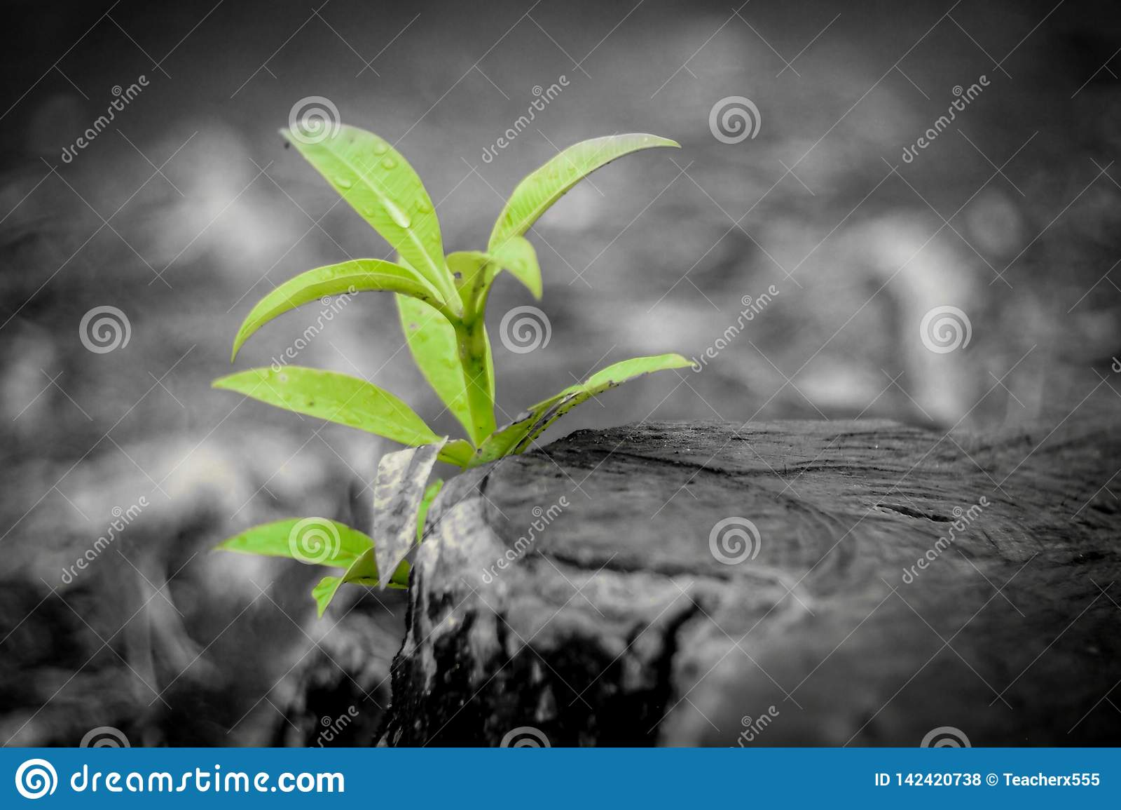 De nieuwe groei van oud concept Gerecycleerde boomstomp die een nieuwe spruit of een zaailing kweken Oud oud logboek met warme gr