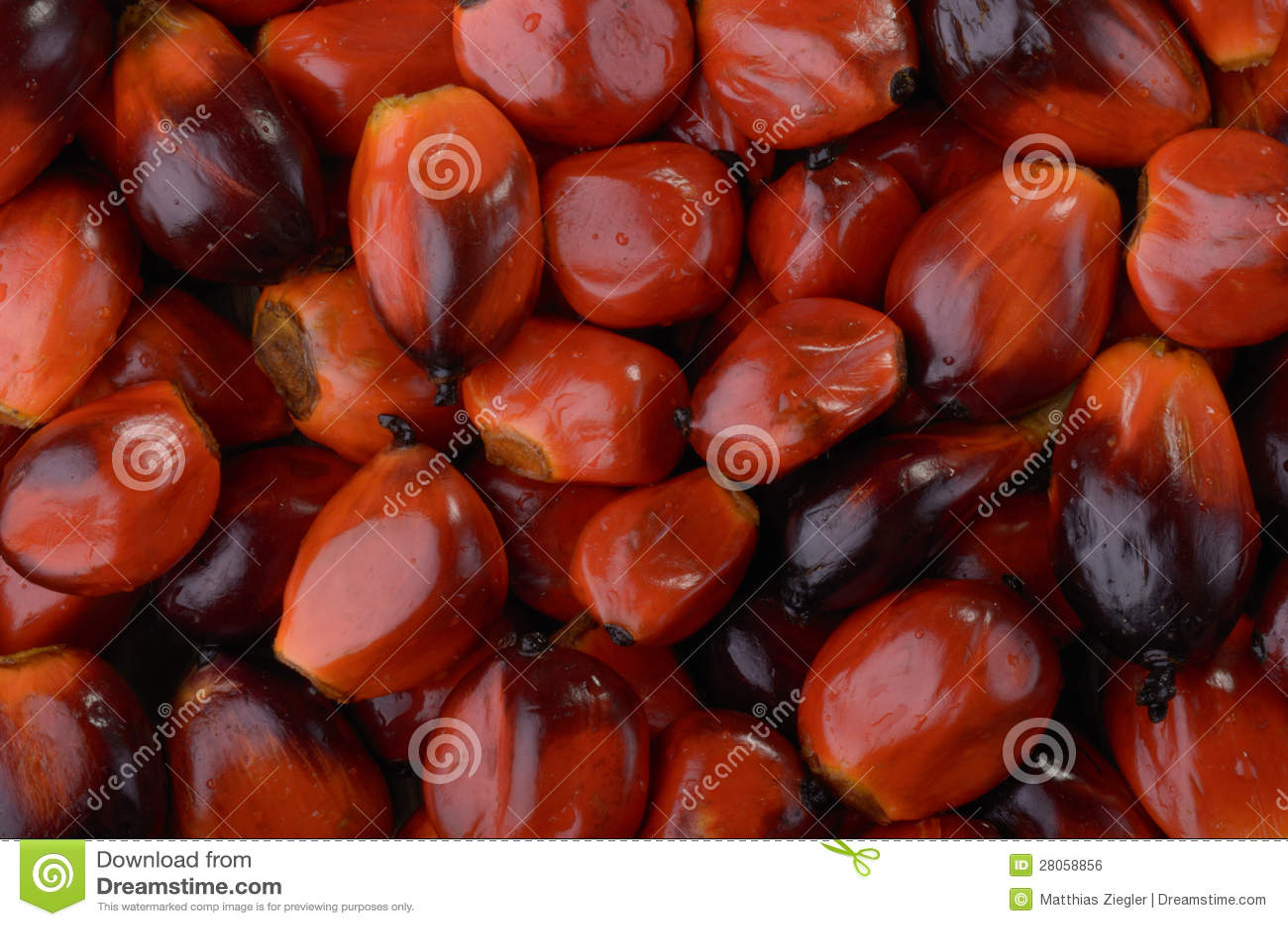 De noten van de palm