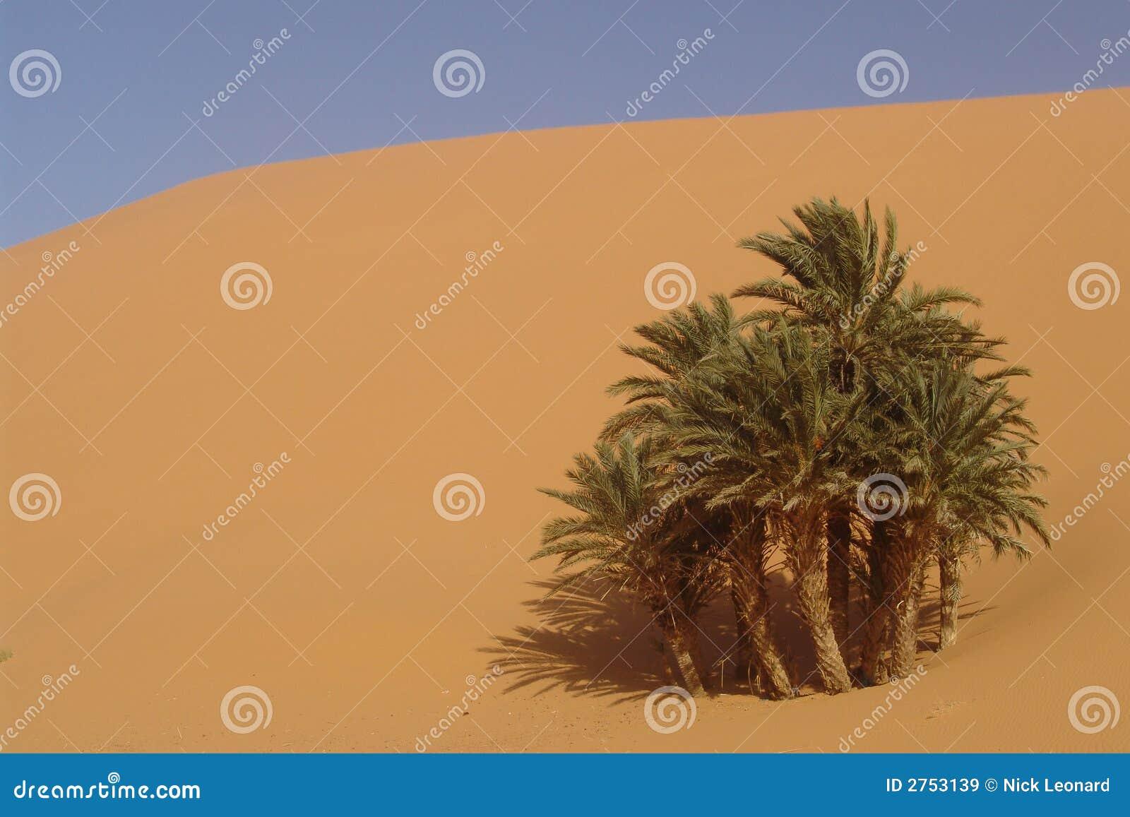 De Oase van de woestijn