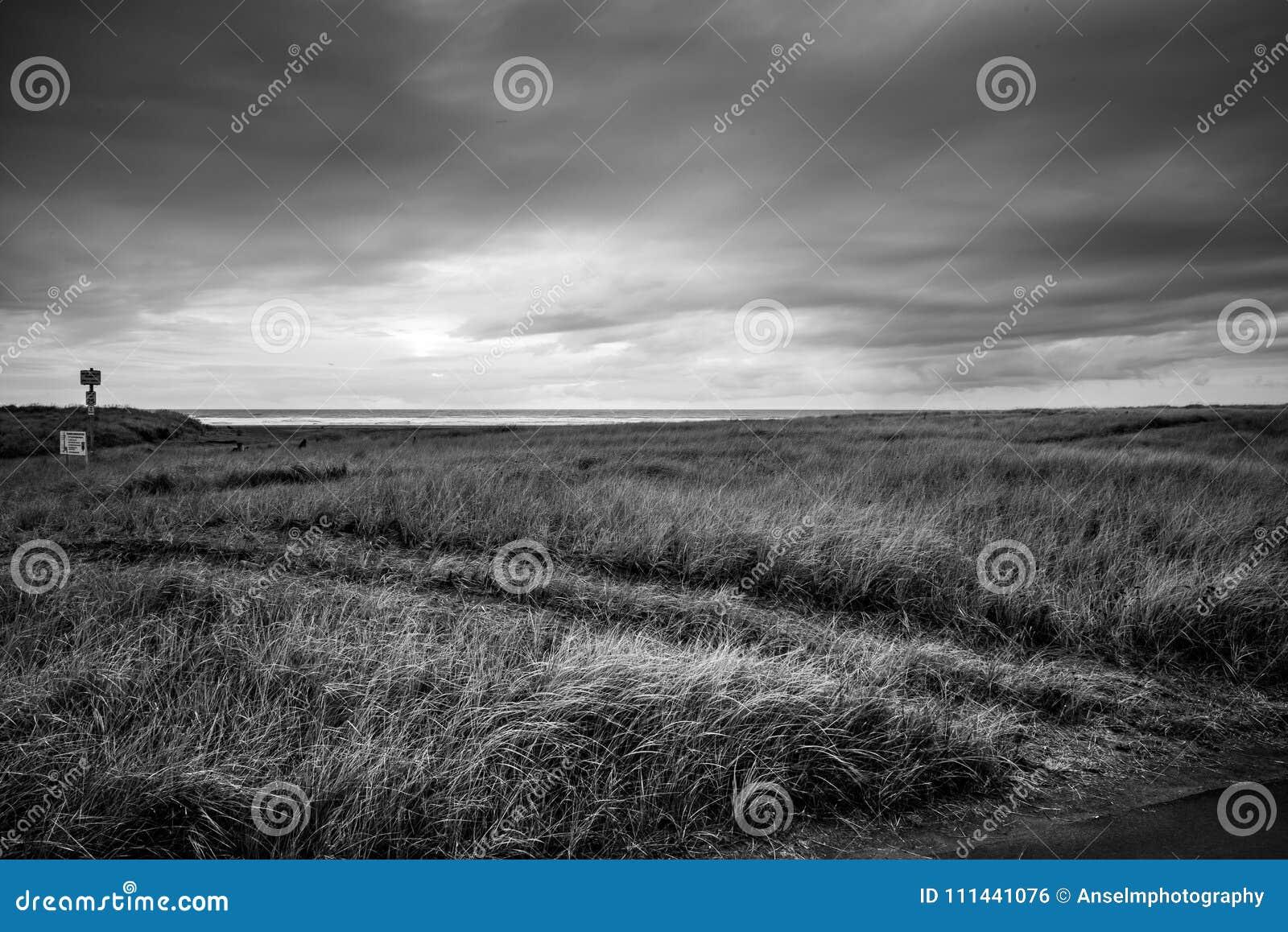 De Oceaan in The Edge van de Horizon is hierboven als een Loopvlak aan de Donkere Hemel en het Grasgebied hieronder tijdens een S