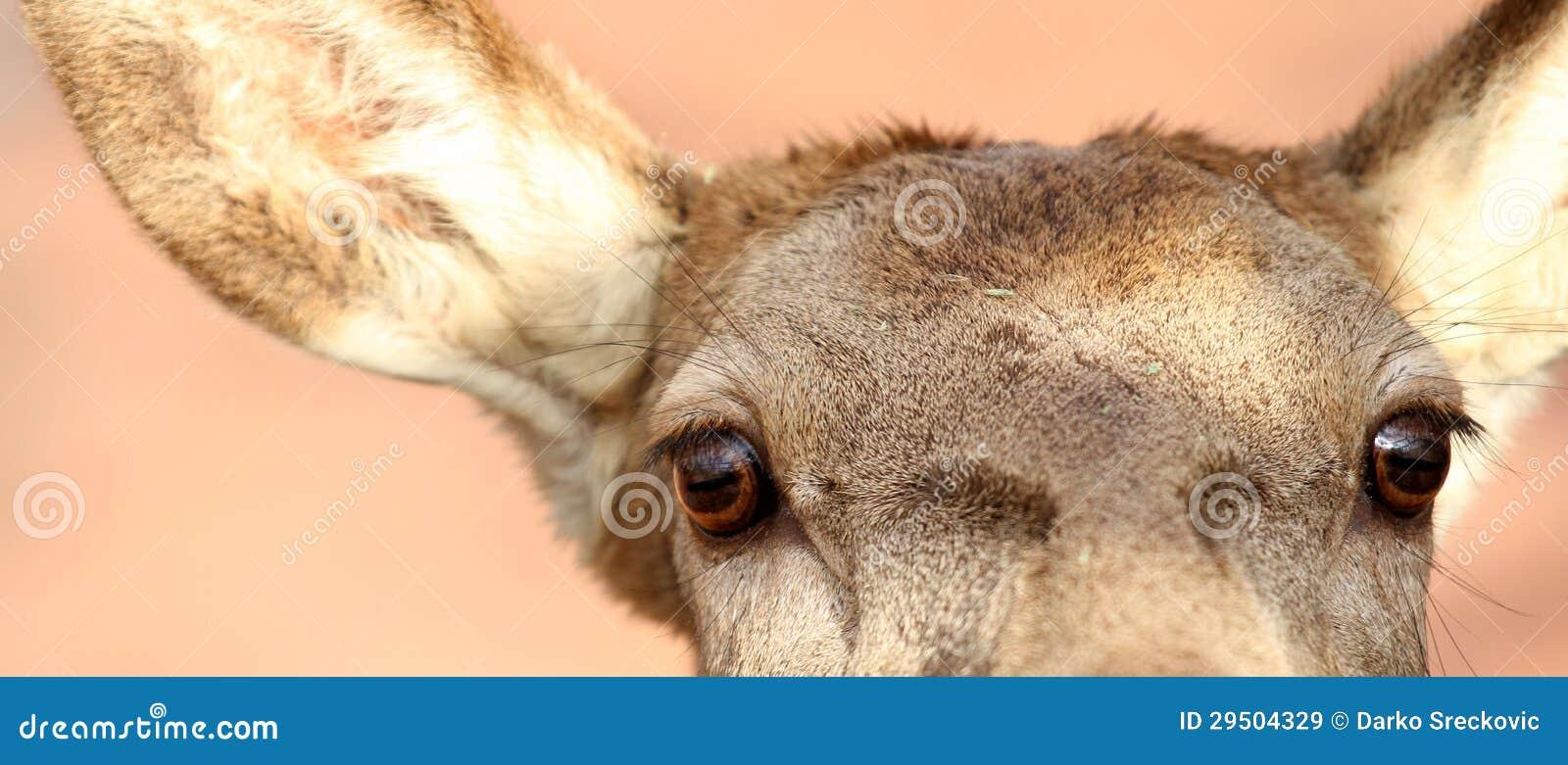 De ogen van herten