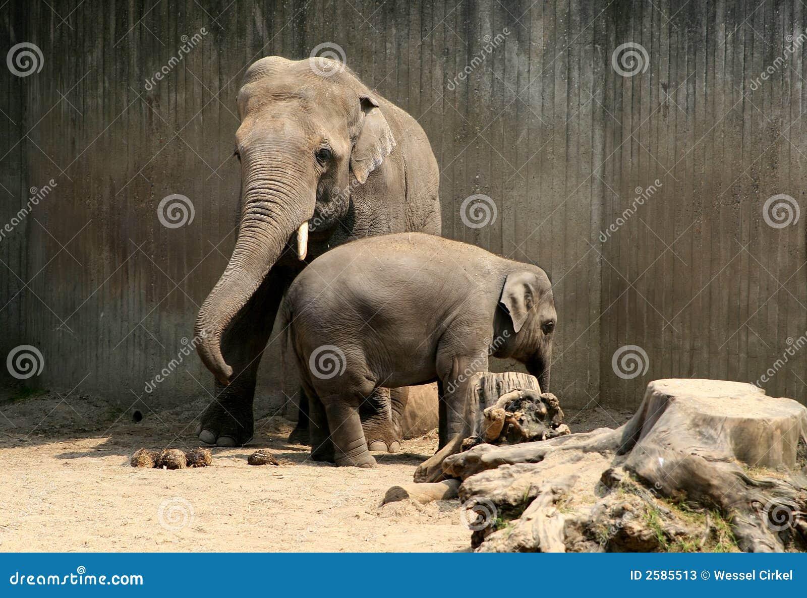 De olifant van de vader en van het kind