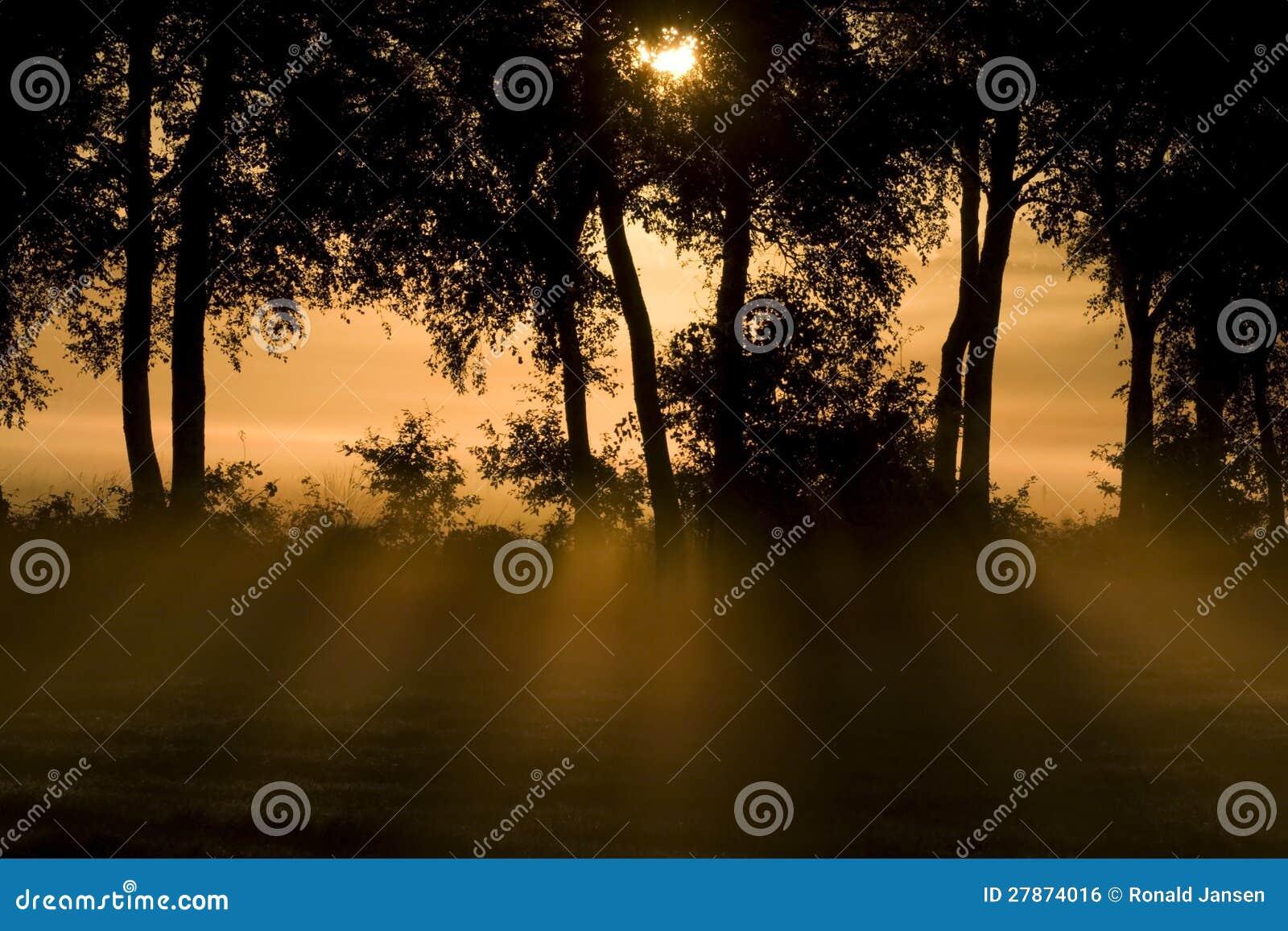 De onderbrekingen van het zonlicht door de bomen