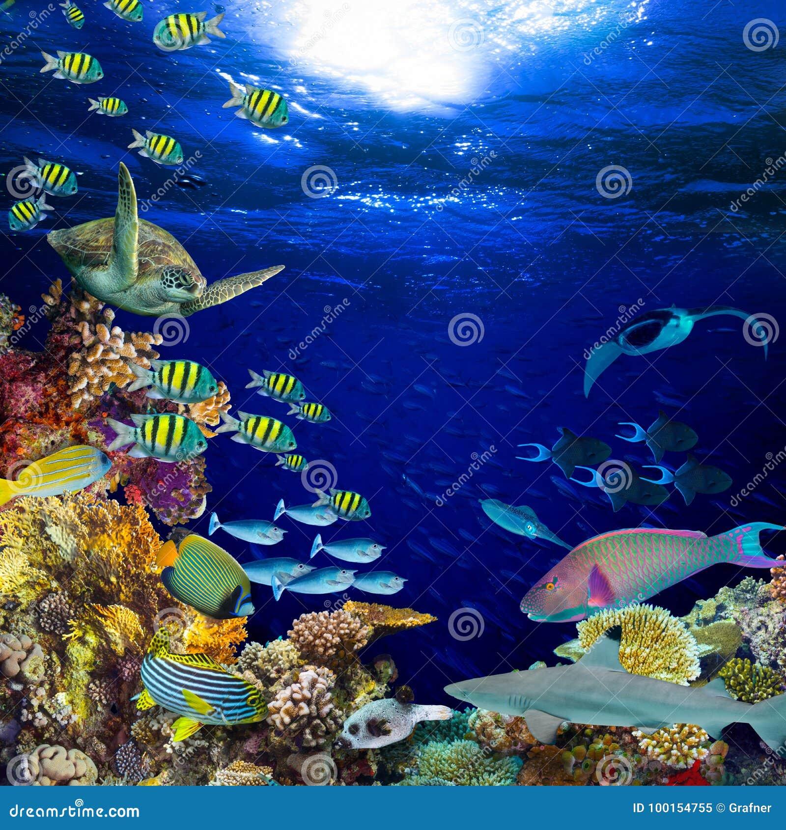 De onderwater vierkante vierkantige achtergrond van het koraalriflandschap