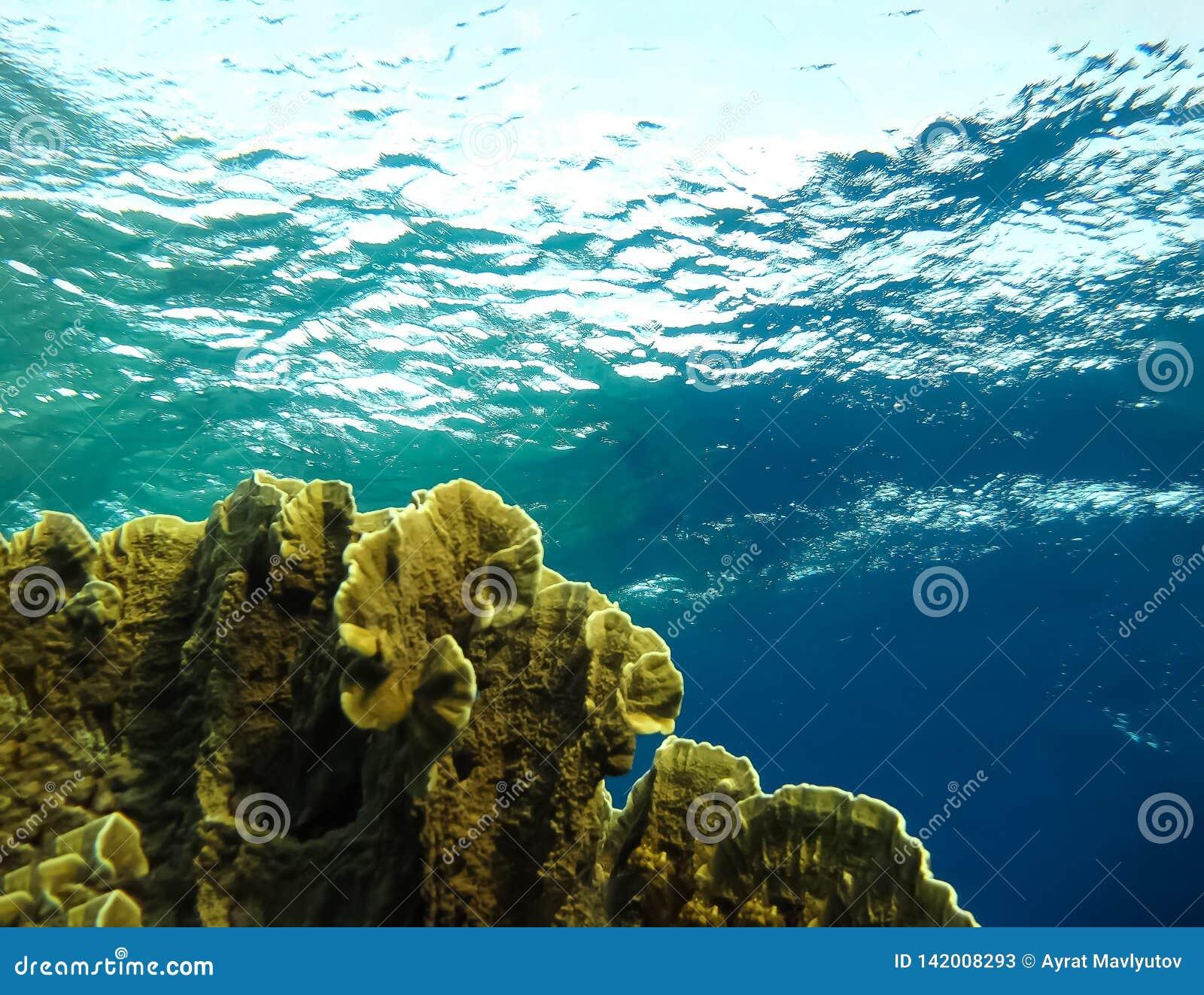 De onderwaterwereld in diep water in koraalrif en installaties bloeit flora in het blauwe wereld mariene wild, Vissen, koralen en