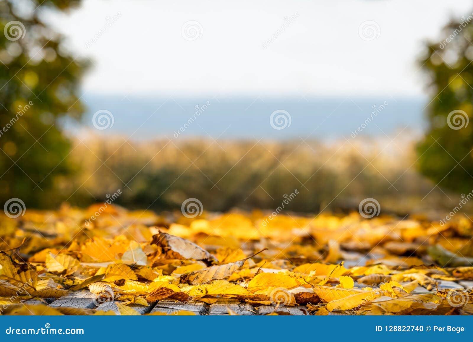 De ondiepe diepte van gebied van velen de gele herfst doorbladert Mooie landschapsmening met exemplaarruimte