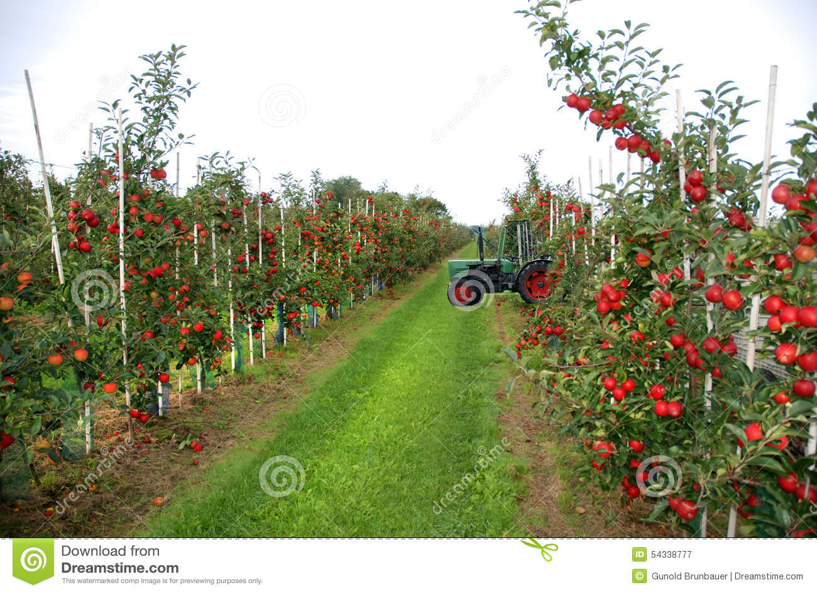 De oogst van Apple