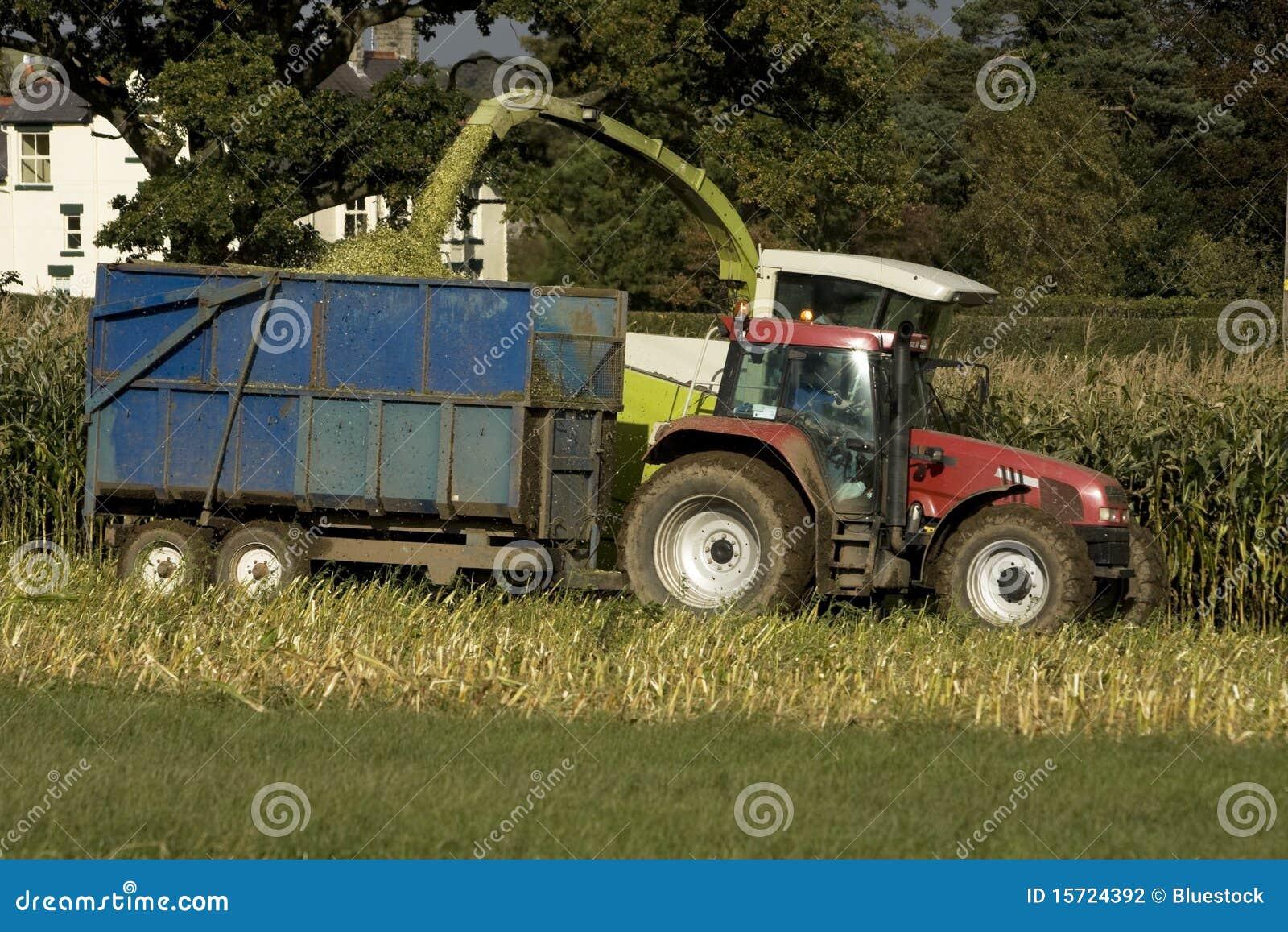 De oogst van het graan