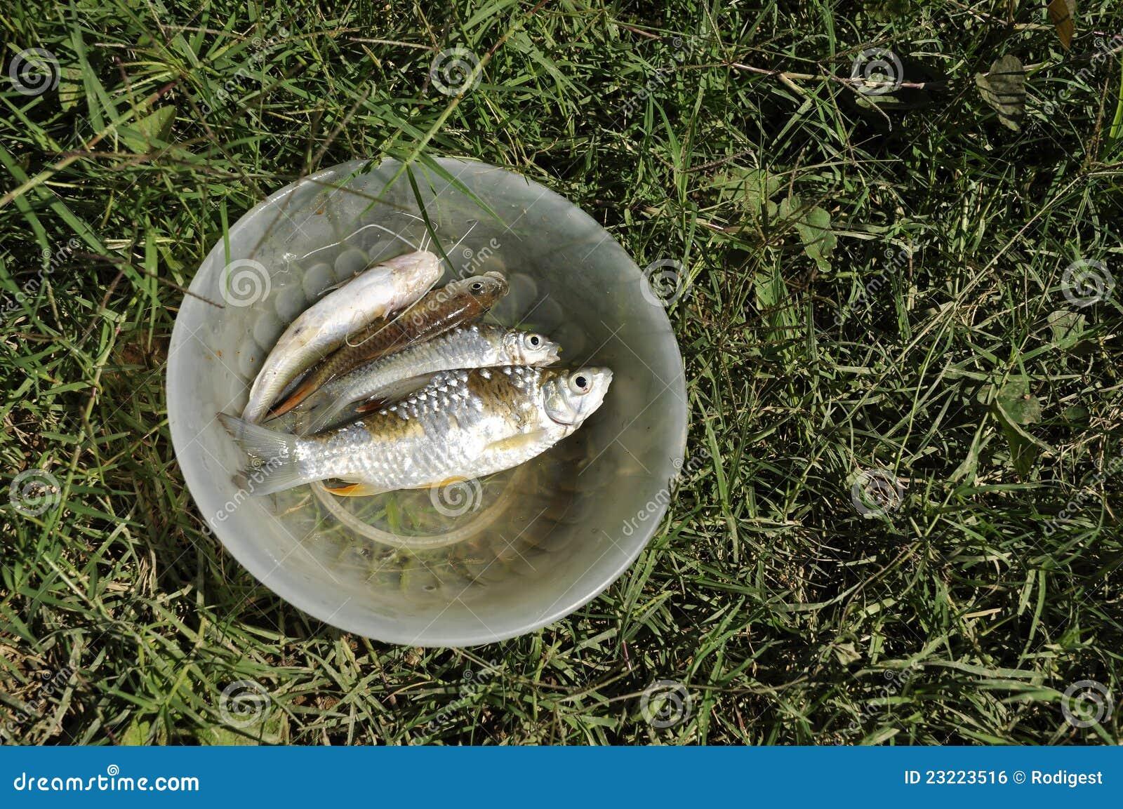 De openluchtkom van het gras van het zoet water van vissen stock foto afbeelding 23223516 - Groen behang van het water ...
