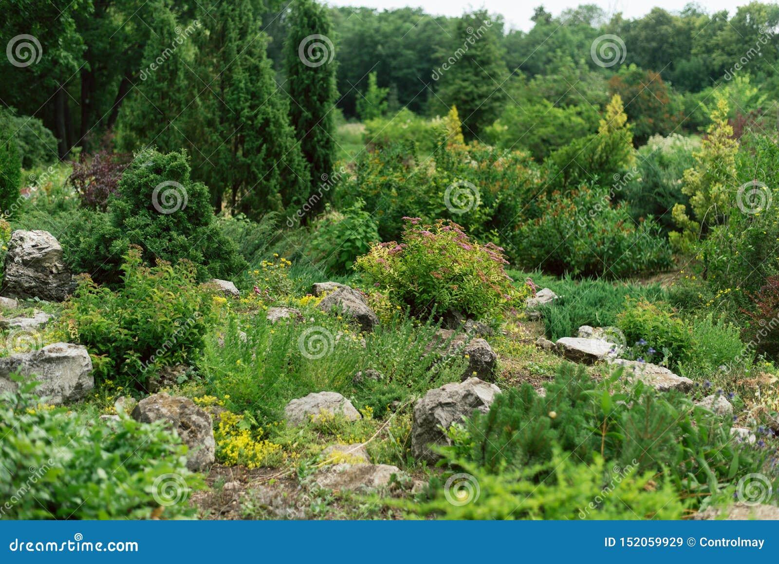 De opleidende studenten in landschap ontwerpen in een botanische tuin Mooie installaties