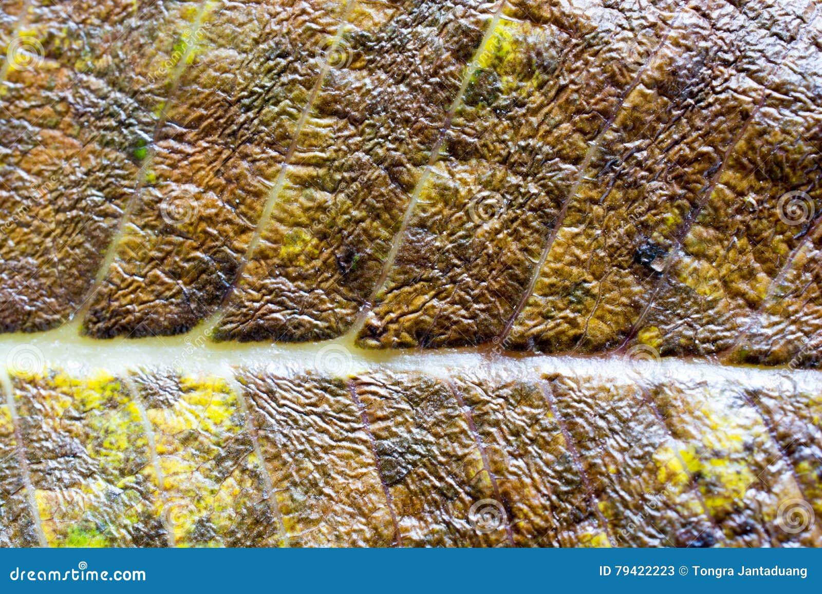 De oppervlakte van het blad van de boom, Bladmacro, detail, kleur, duidelijkheid, lijnen, het in de schaduw stellen