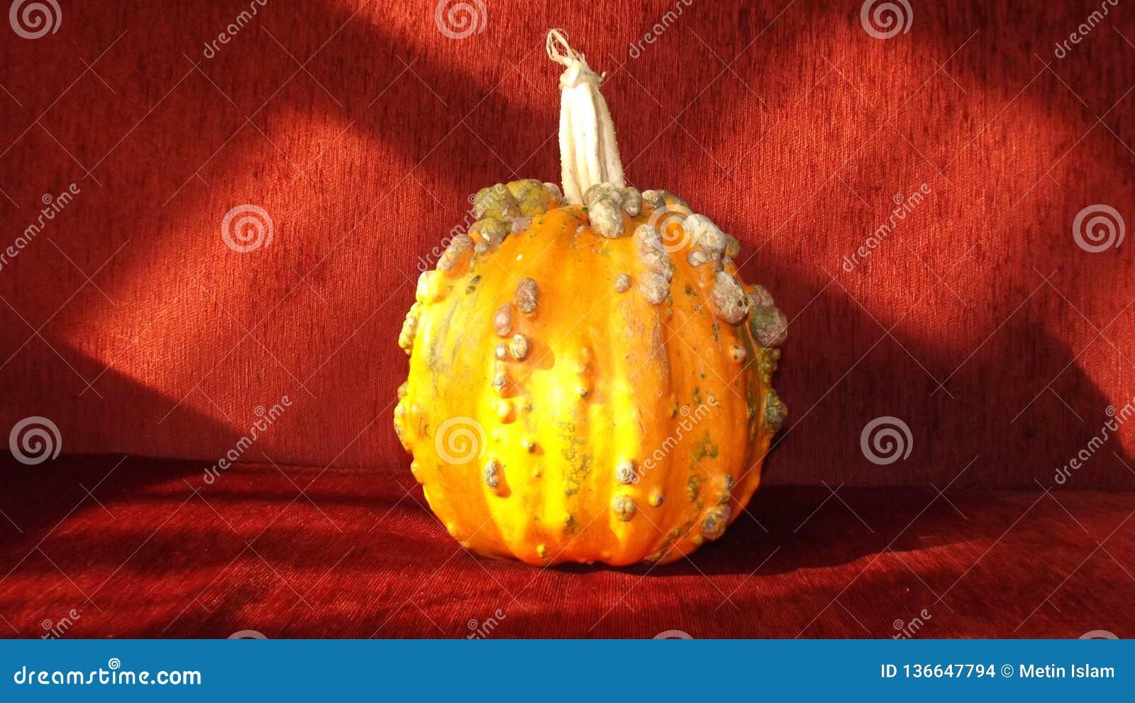 De oranje pompoen van Halloween en rode achtergrond
