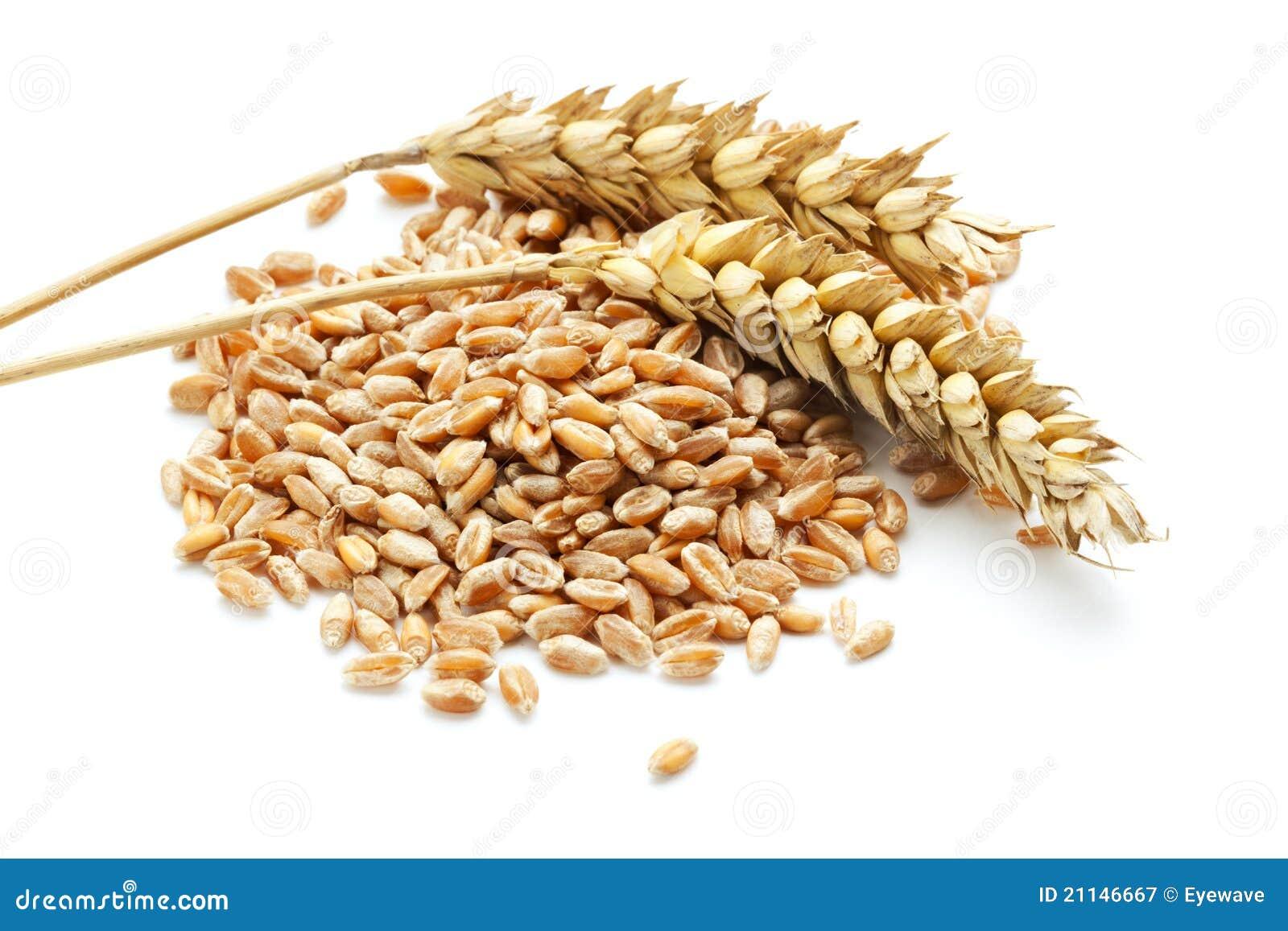 De oren en de korrel van de tarwe