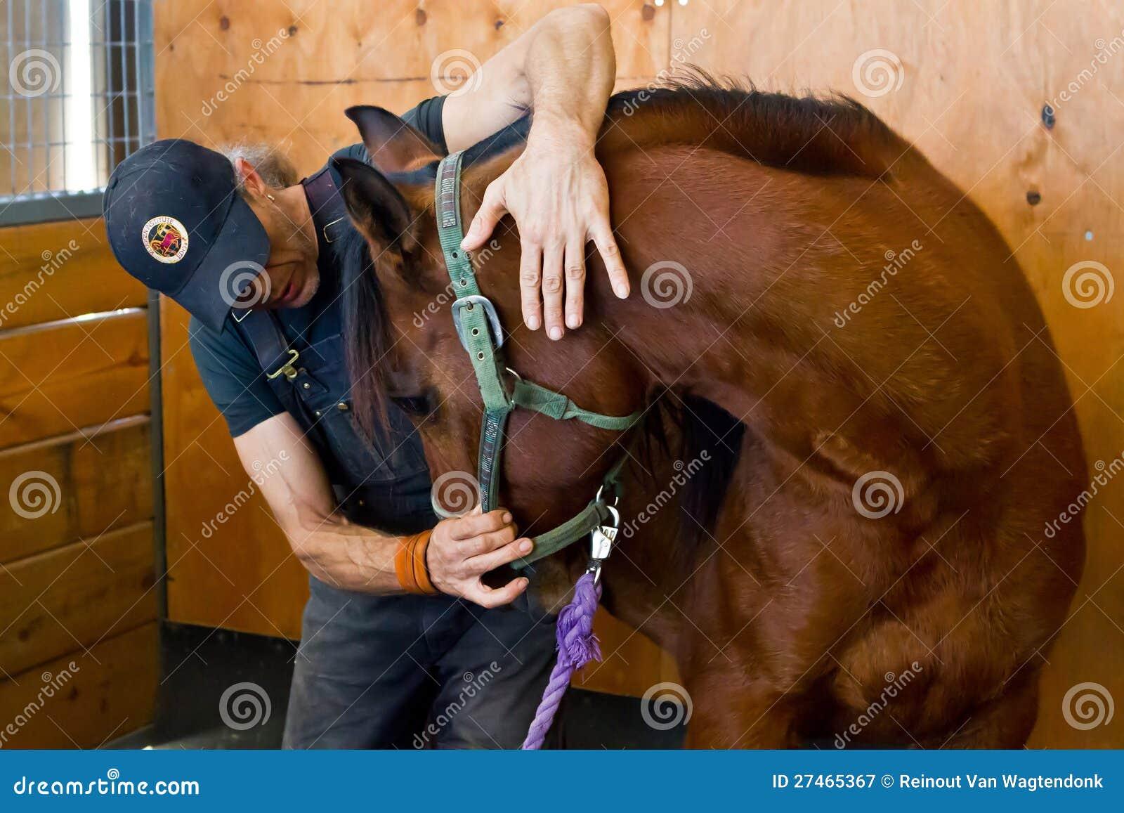 De osteopaat van het paard redactionele fotografie ...