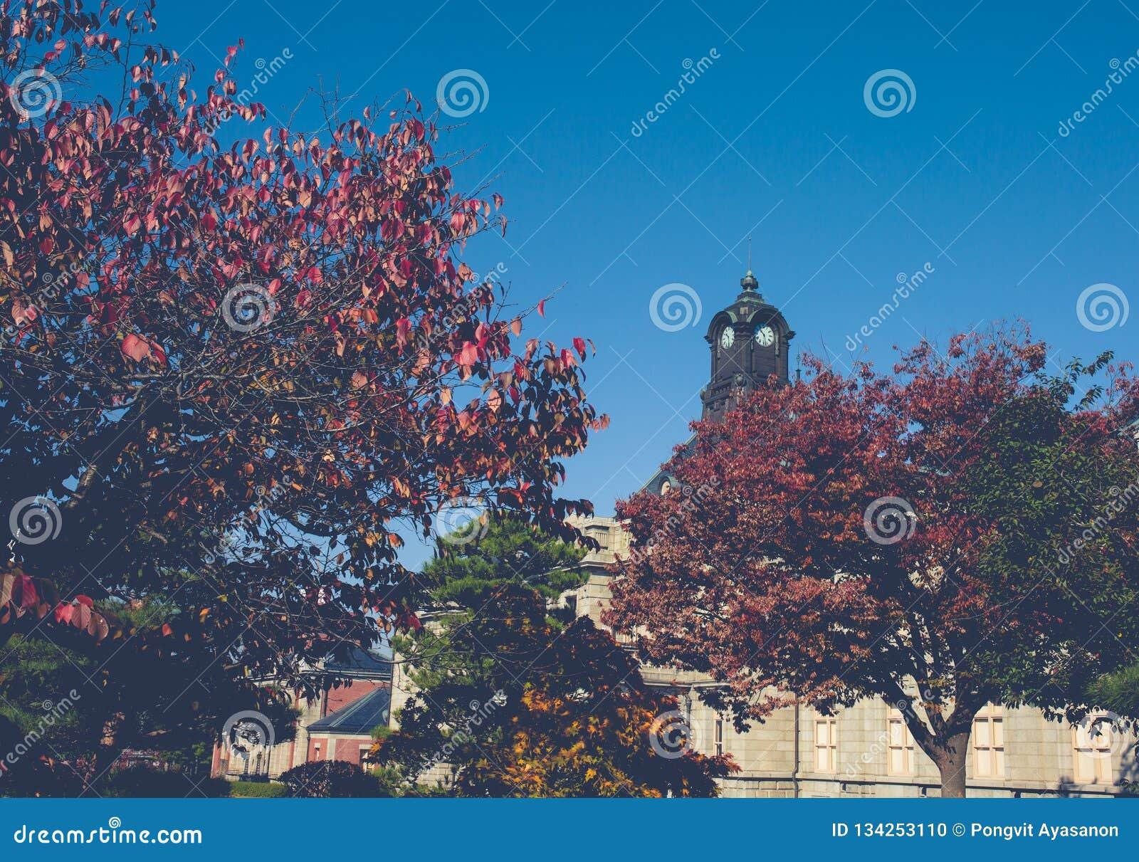 De oude klokketoren op het dak van het oude gebouw heeft rode bladeren, oranje en blauwe hemel De herfst in Yamagata, Japan, Wijn