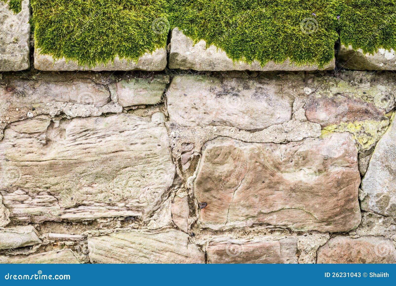 De oude middeleeuwse bemoste muur van de close up stock afbeelding afbeelding 26231043 - Muur van de ingang ...