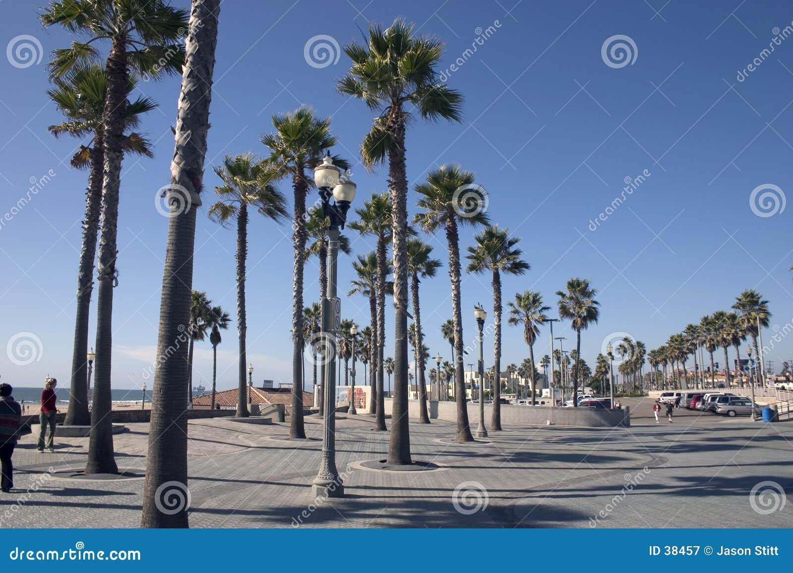 De Palmen van Californië
