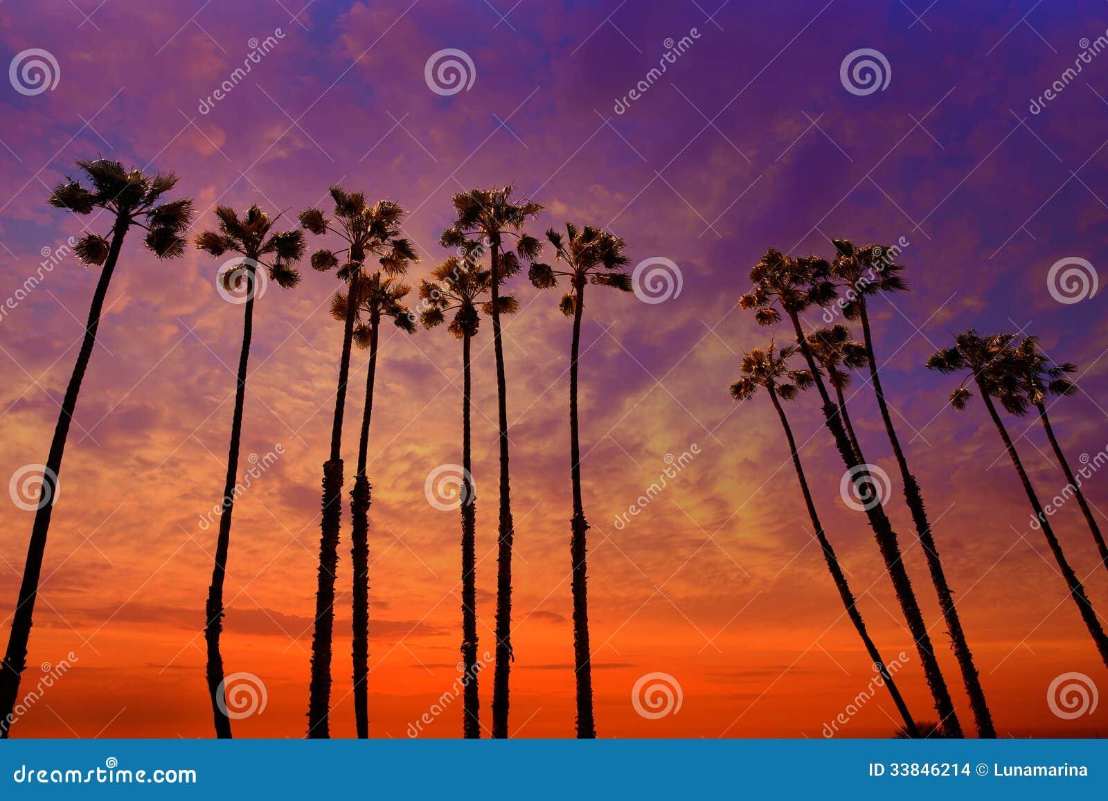 De palmenzonsondergang van Californië met kleurrijke hemel