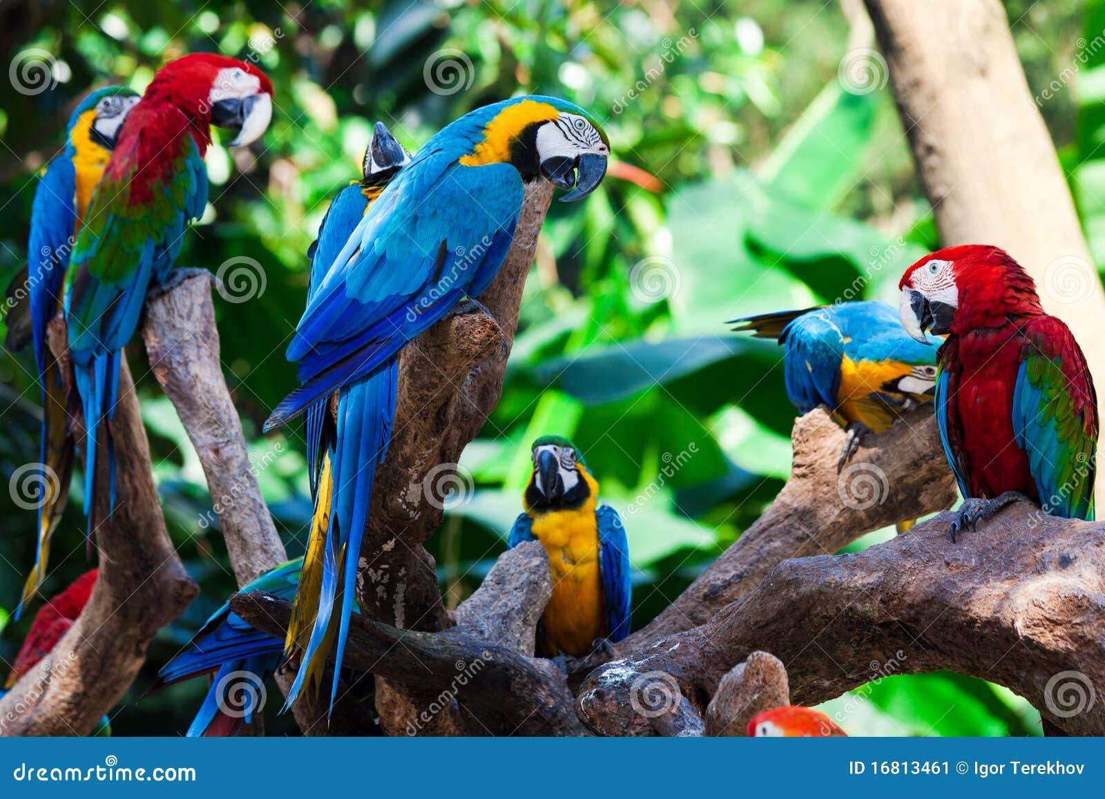 De papegaaien van de groep
