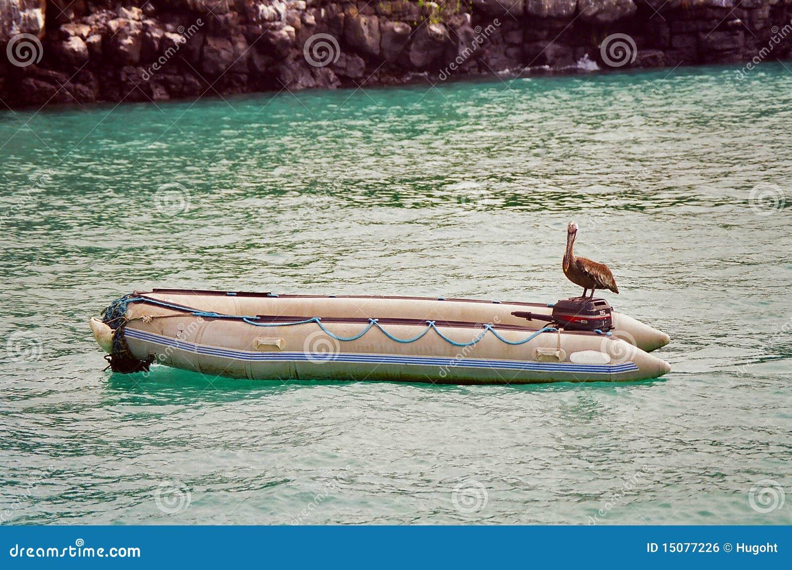 De pelikaan van de Galapagos op boot