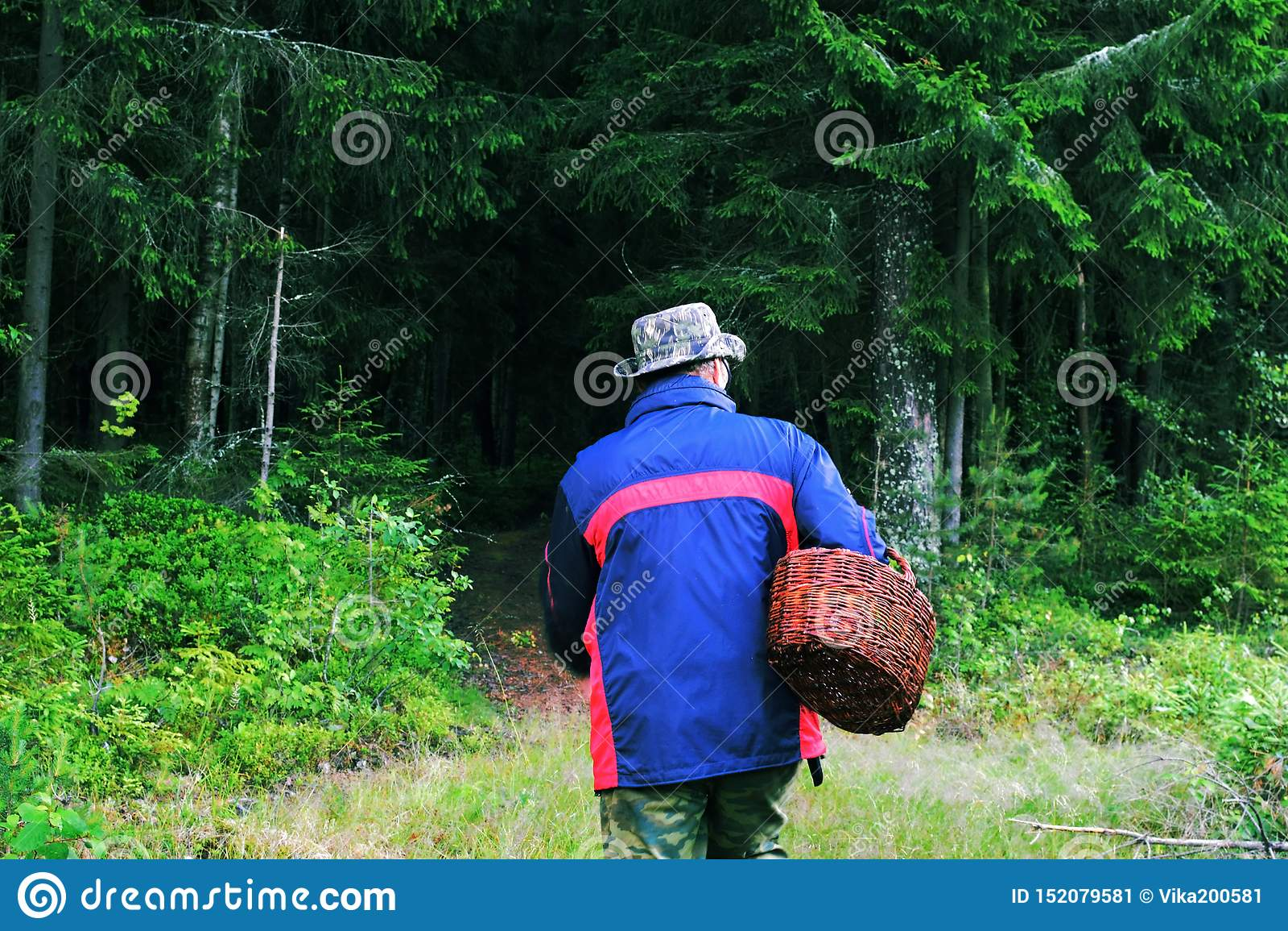 De persoon met een mand schiet in het bos als paddestoelen uit de grond