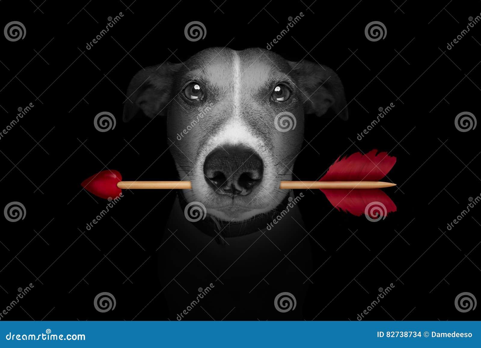 De pijlvalentijnskaarten van de hondliefde