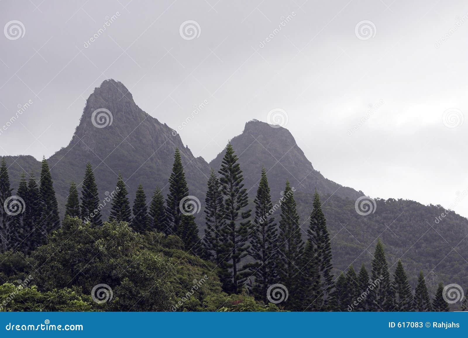 De Pijnbomen van Norfork in de Mist