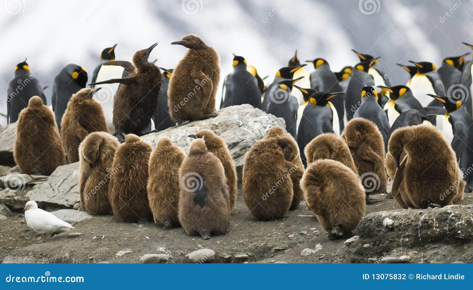 De pinguïn bekvecht