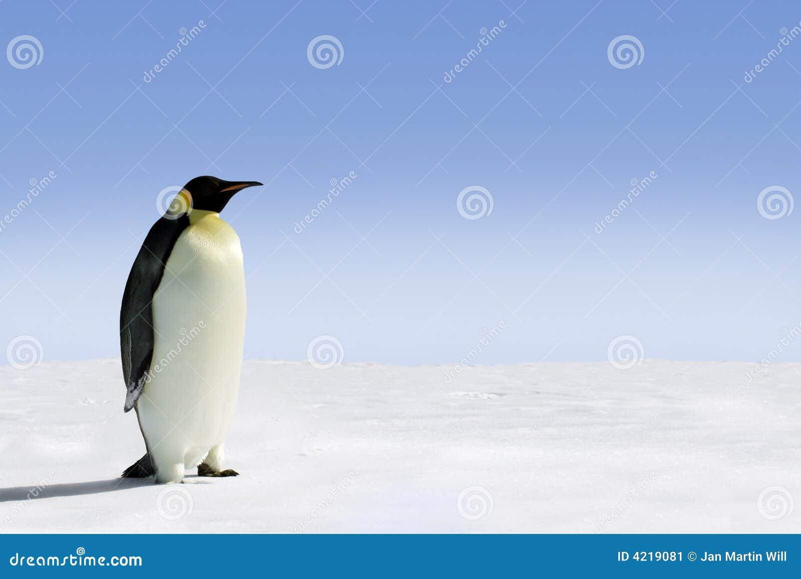 De pinguïn van de keizer in Antarctica