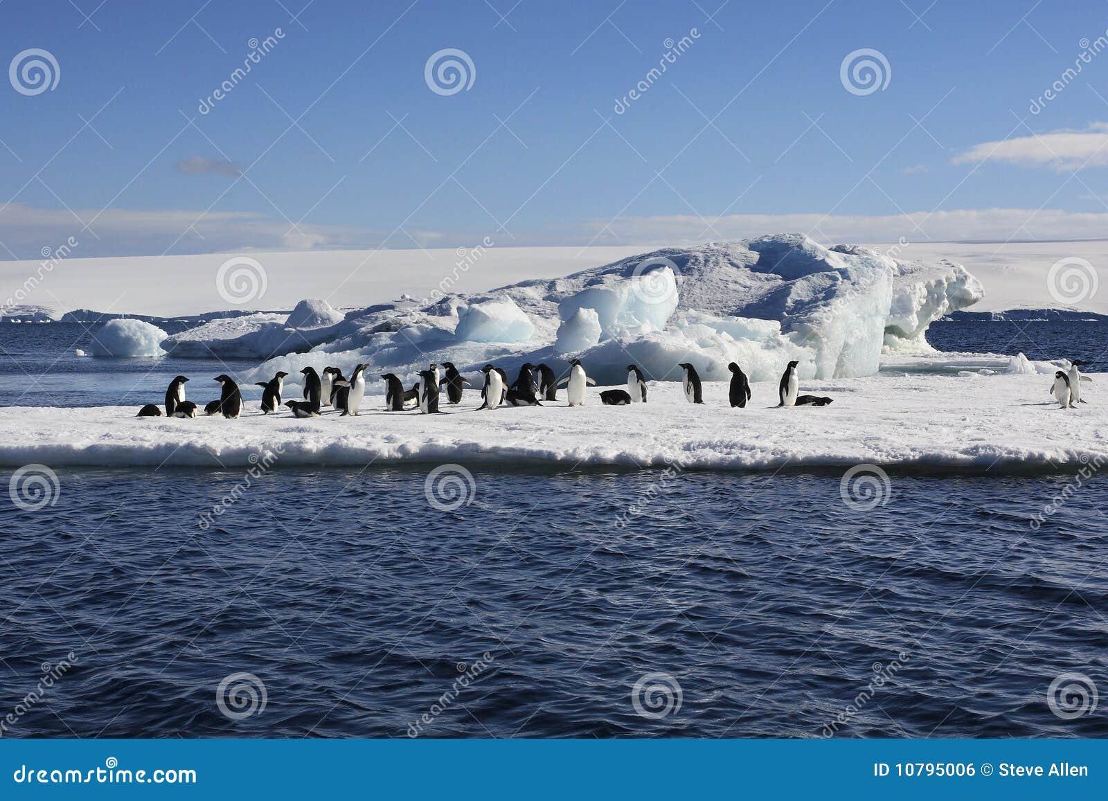 De Pinguïnen van Adelie - Antarctica