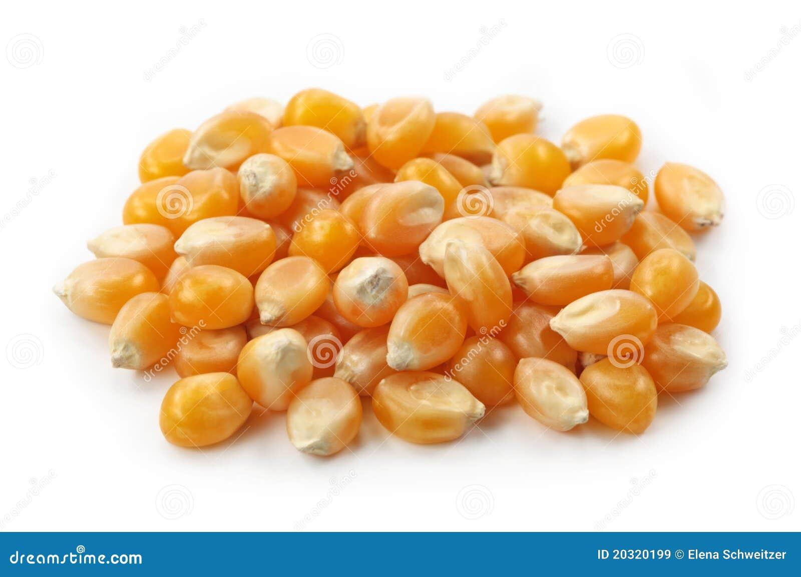 De pitten van de maïs