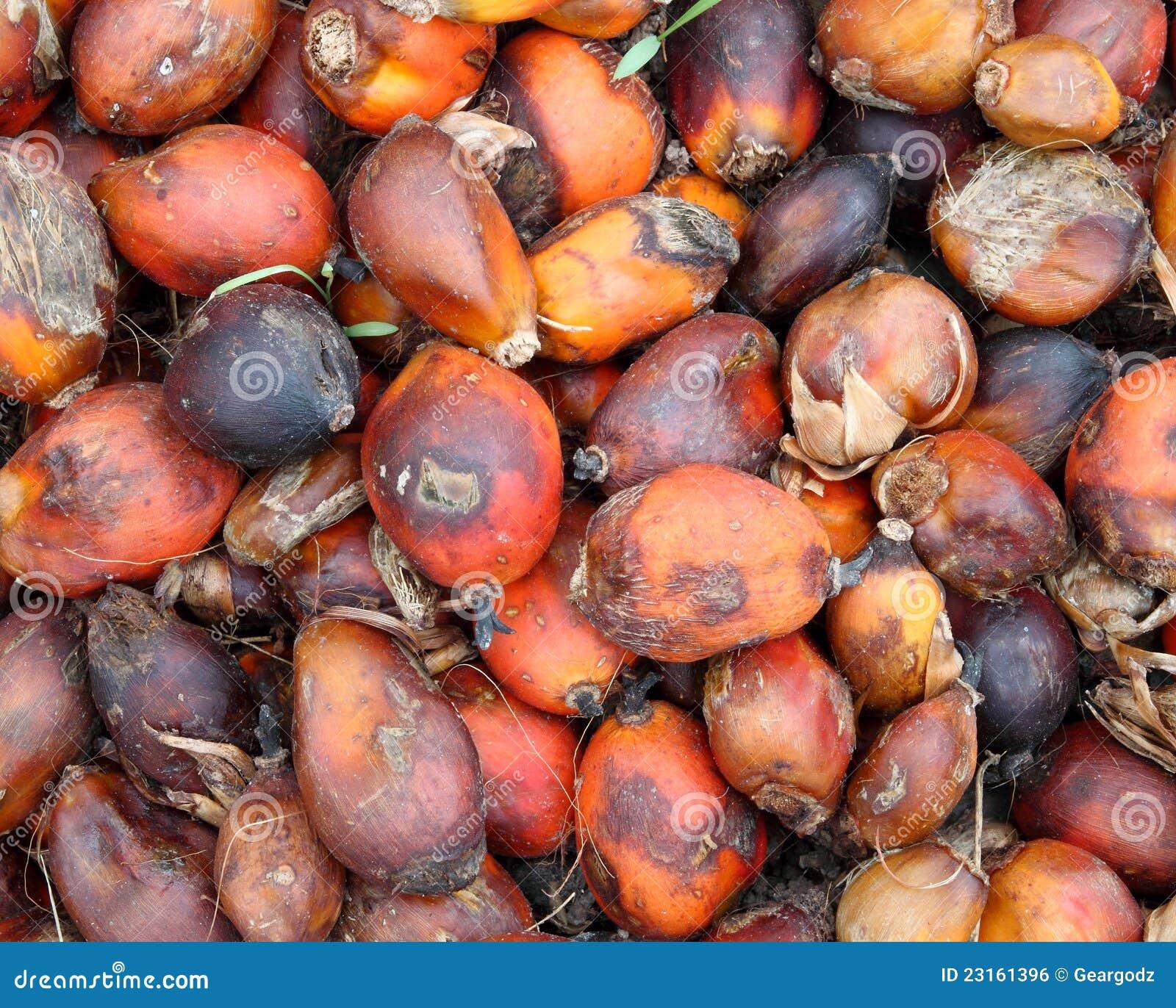De pitten van de palm