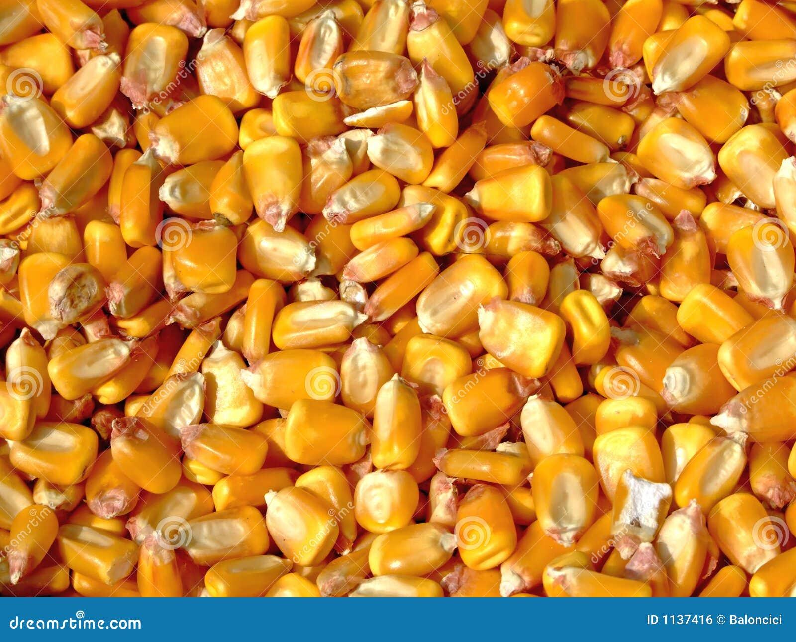 De pitten van het graan