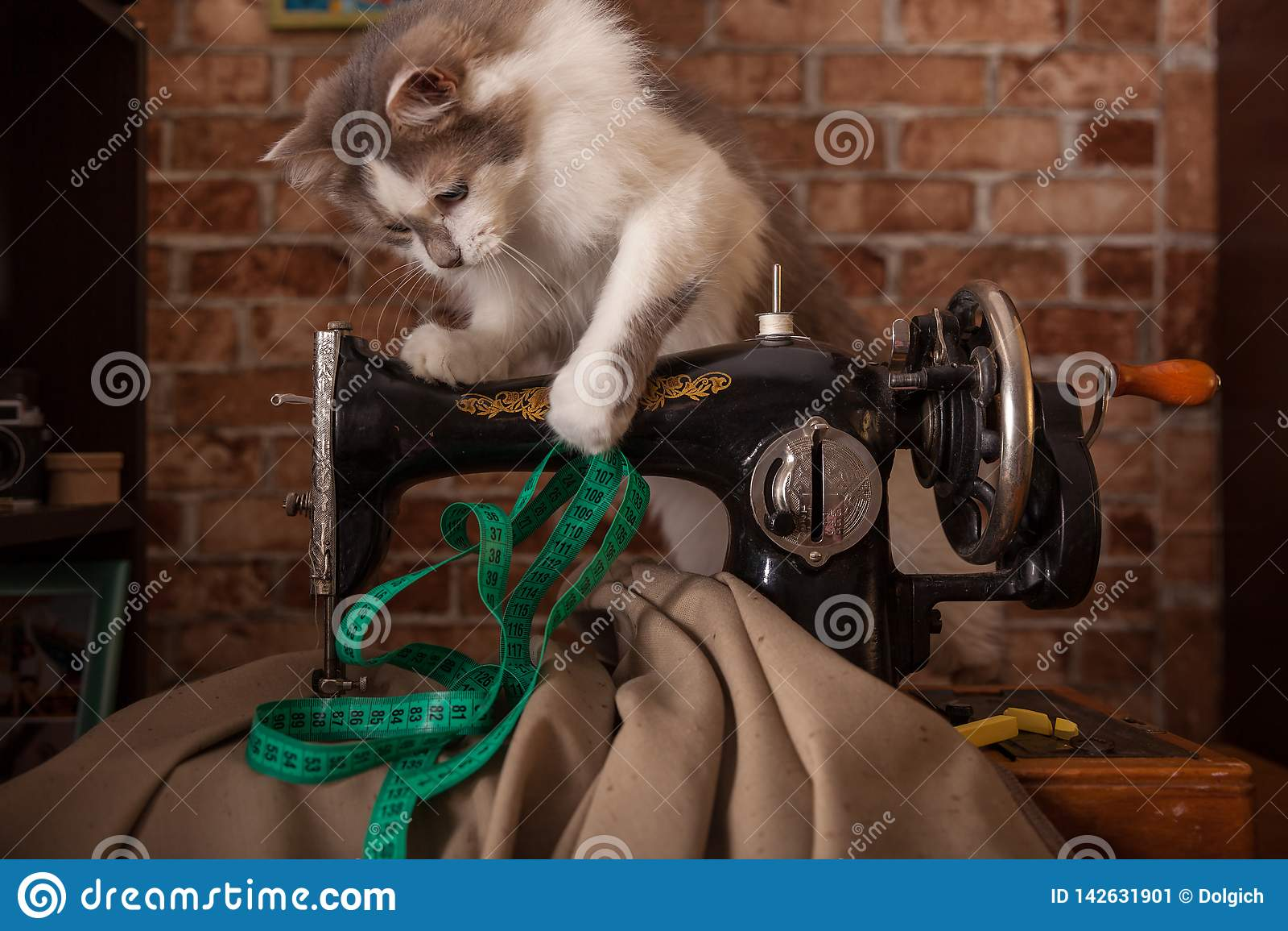 De pluizige kat speelt en steelt groene metende band Oude naaimachine