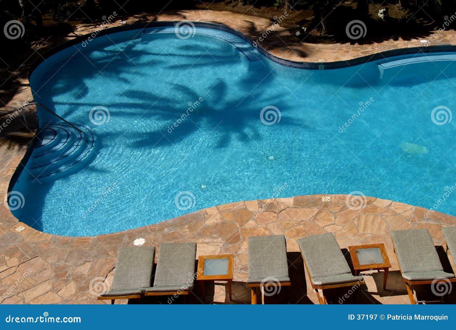 De Pool van de palm